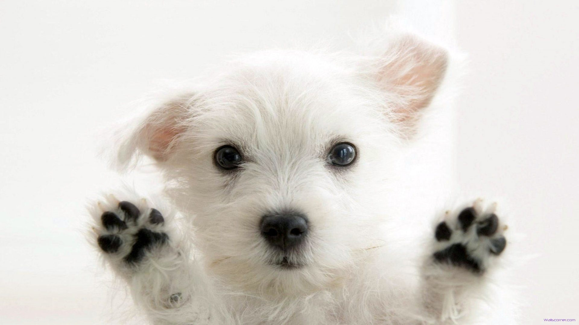 Cute Puppies and Kittens HD wallpapers collection #15