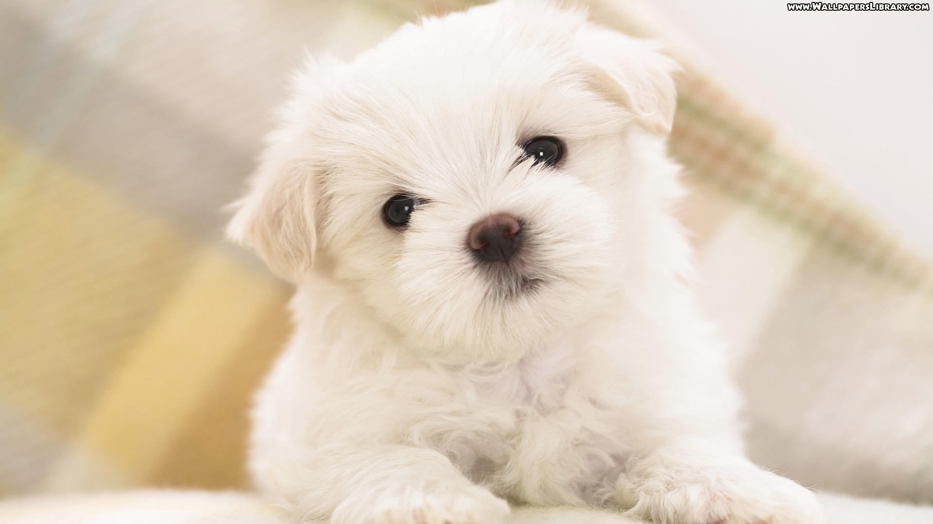 Cute puppy images for wallpaper dowload