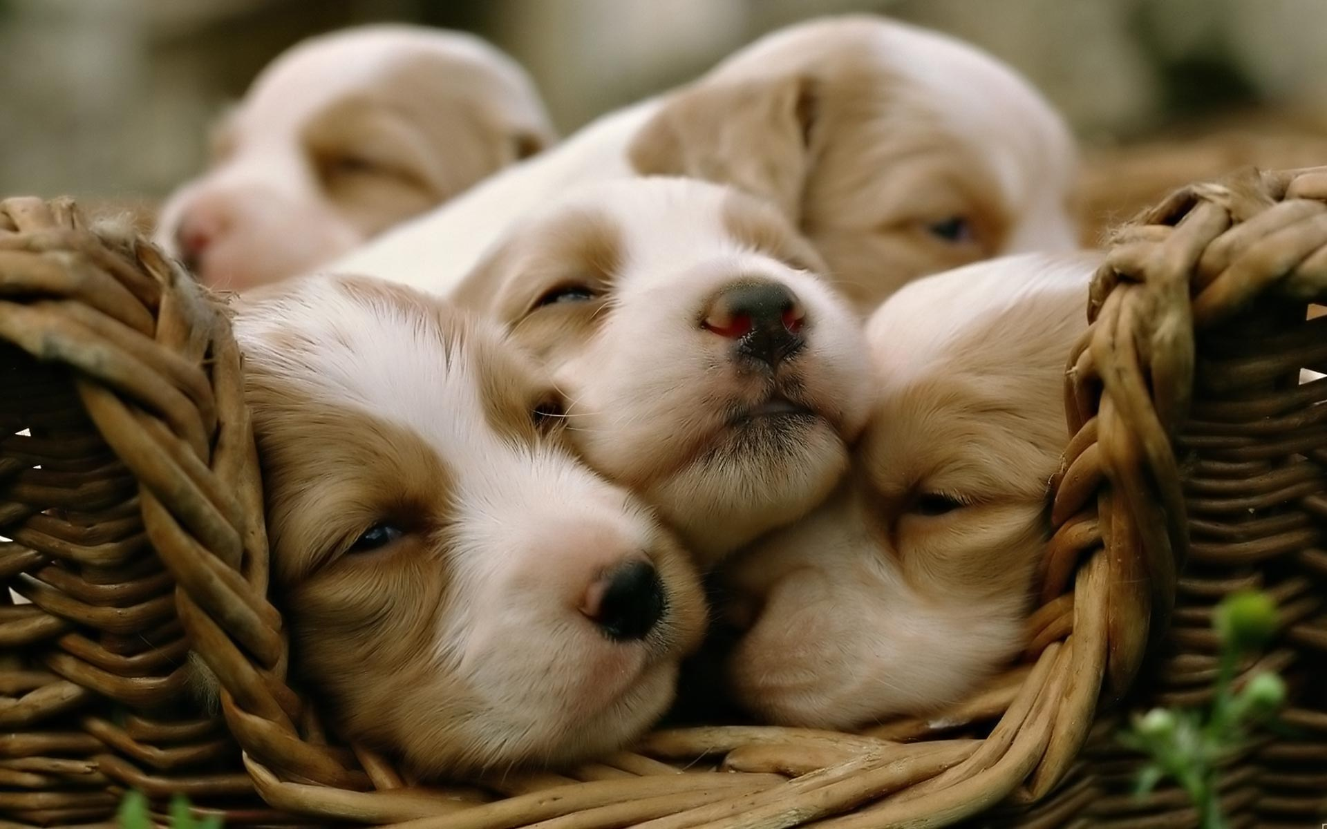 Cute Puppy Wallpaper Desktop 30118 Hd Wallpapers