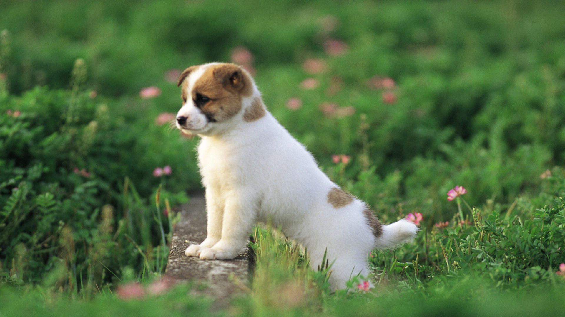 Cute Puppy Pictures 16947