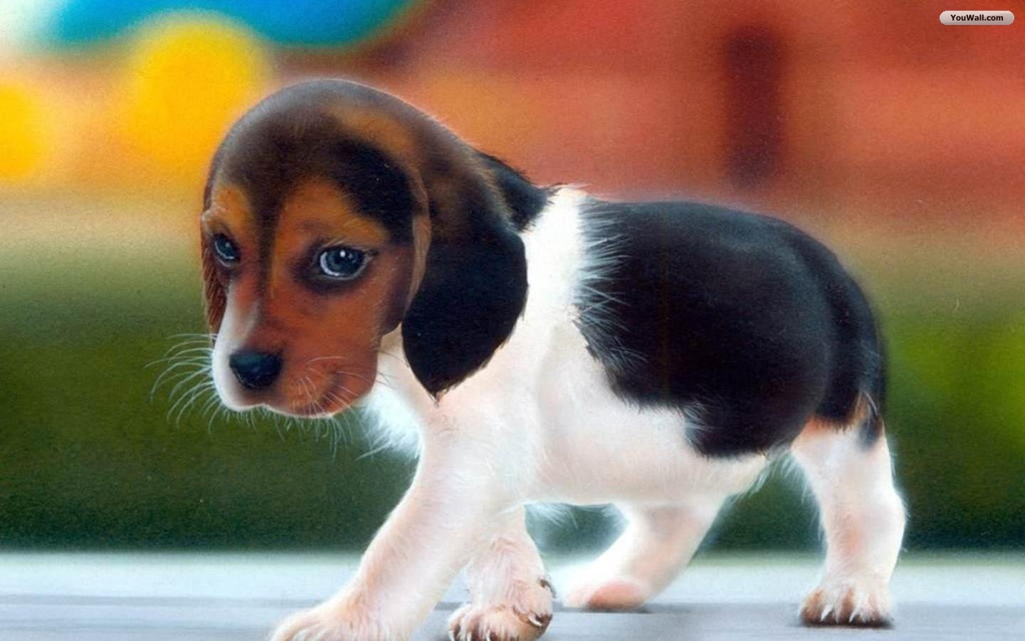 Imgisland Free Animals Cute Puppy