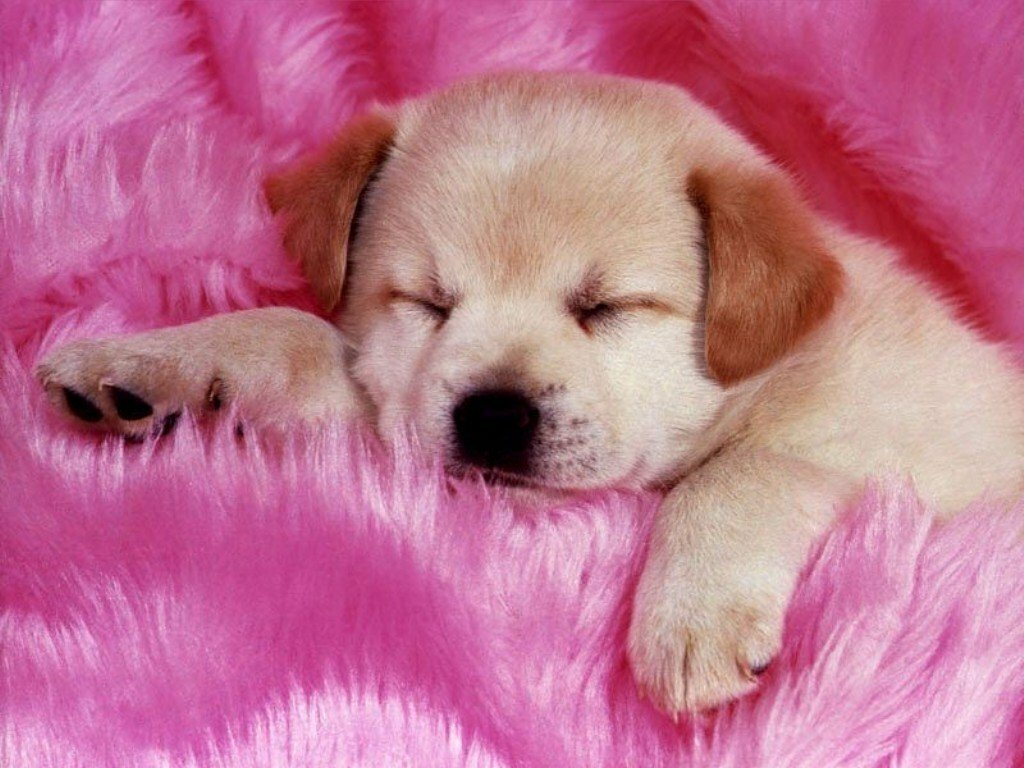 Babies Pets and Animals Cute puppy