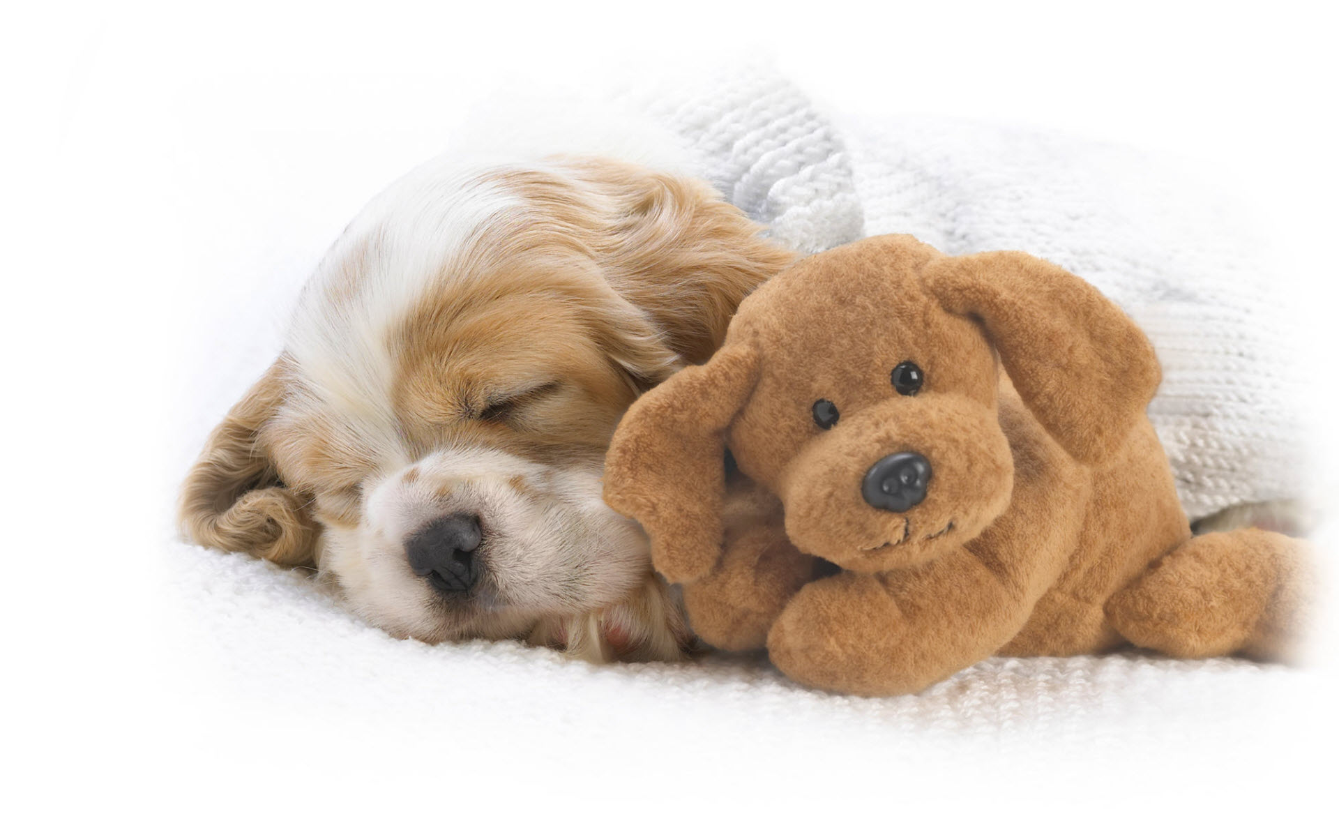 Cute Wallpapers Wallpaper Animals Wallpapers Puppy Sleeping Cute