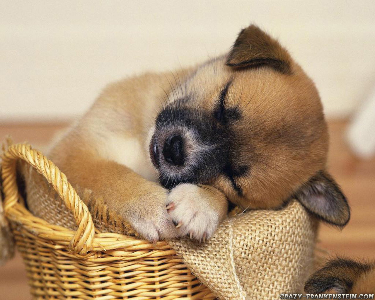 Cute Puppy Sleeping Animals Wallpapers 1280x1024 Pixel 416 Kb Jpg