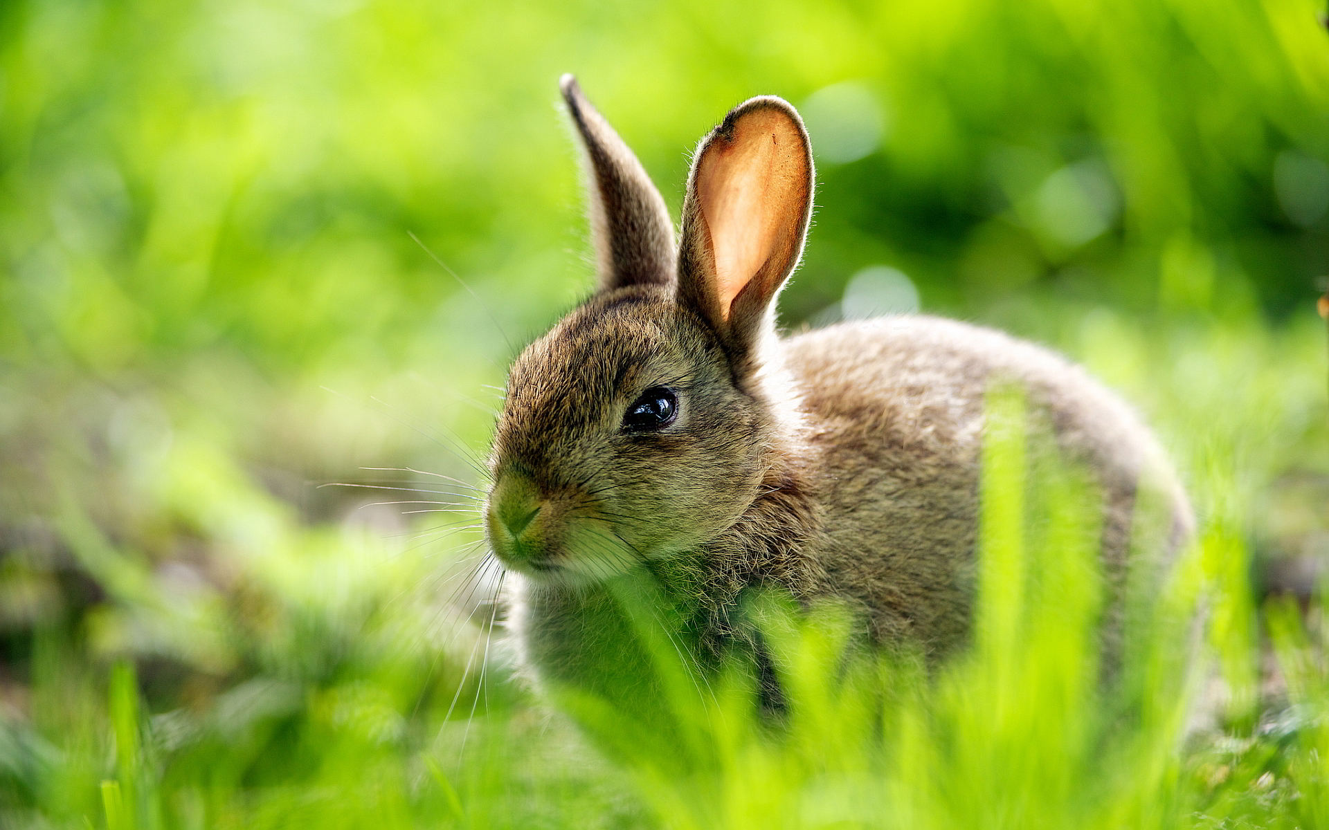 Cute rabbit grass