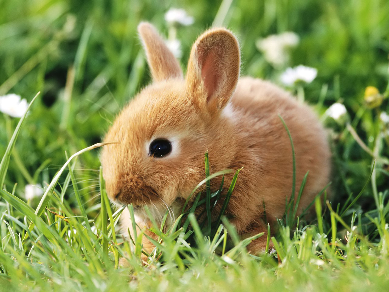 cute little rabbit ...
