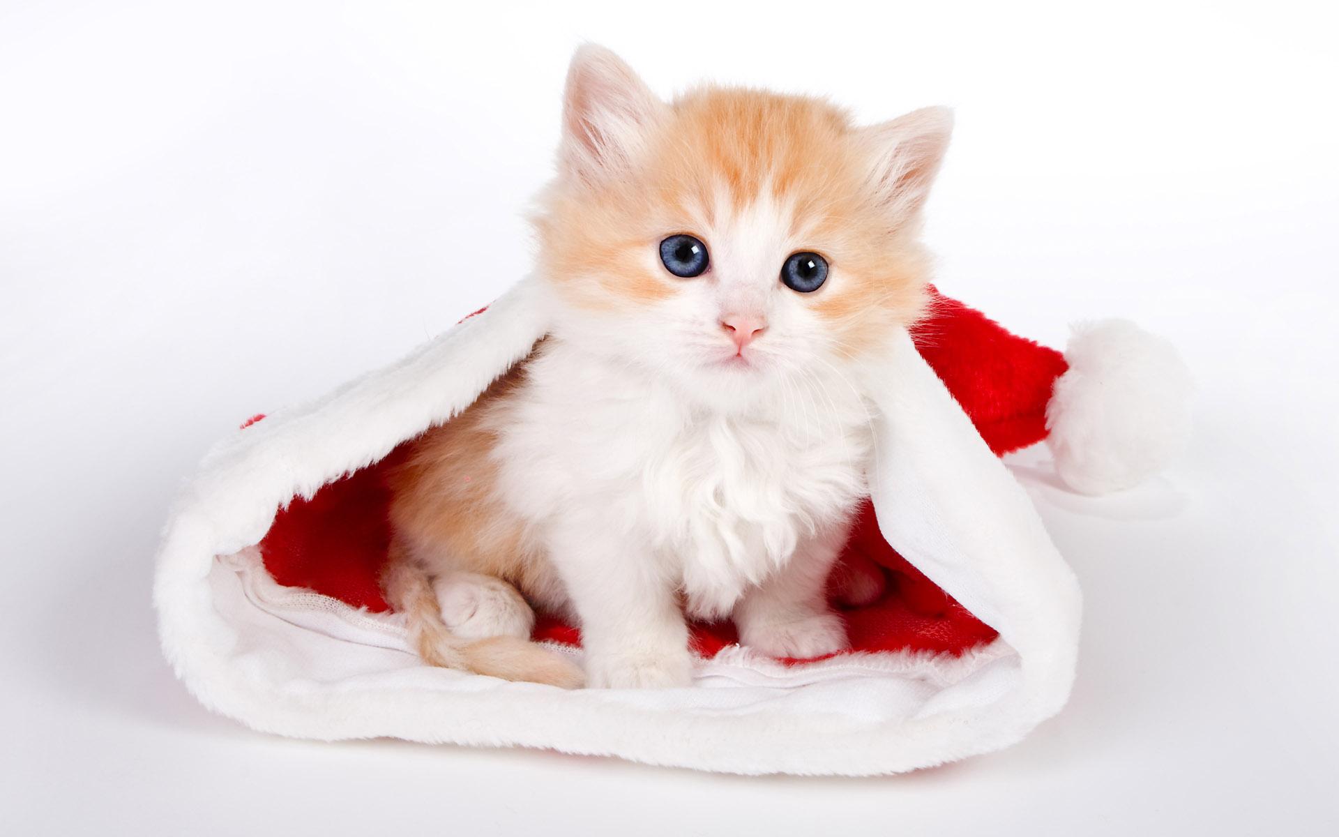 Cute Santa Hat Wallpaper 41716 1920x1200 px
