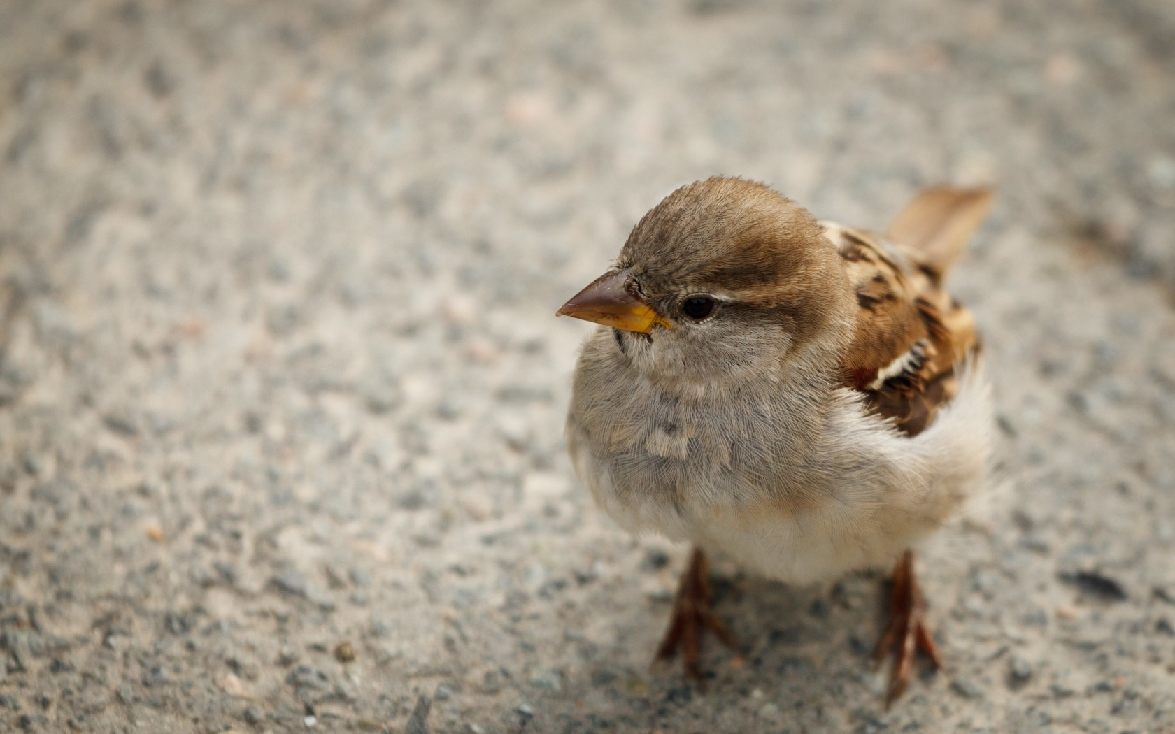 Cute Sparrow Pictures 38992