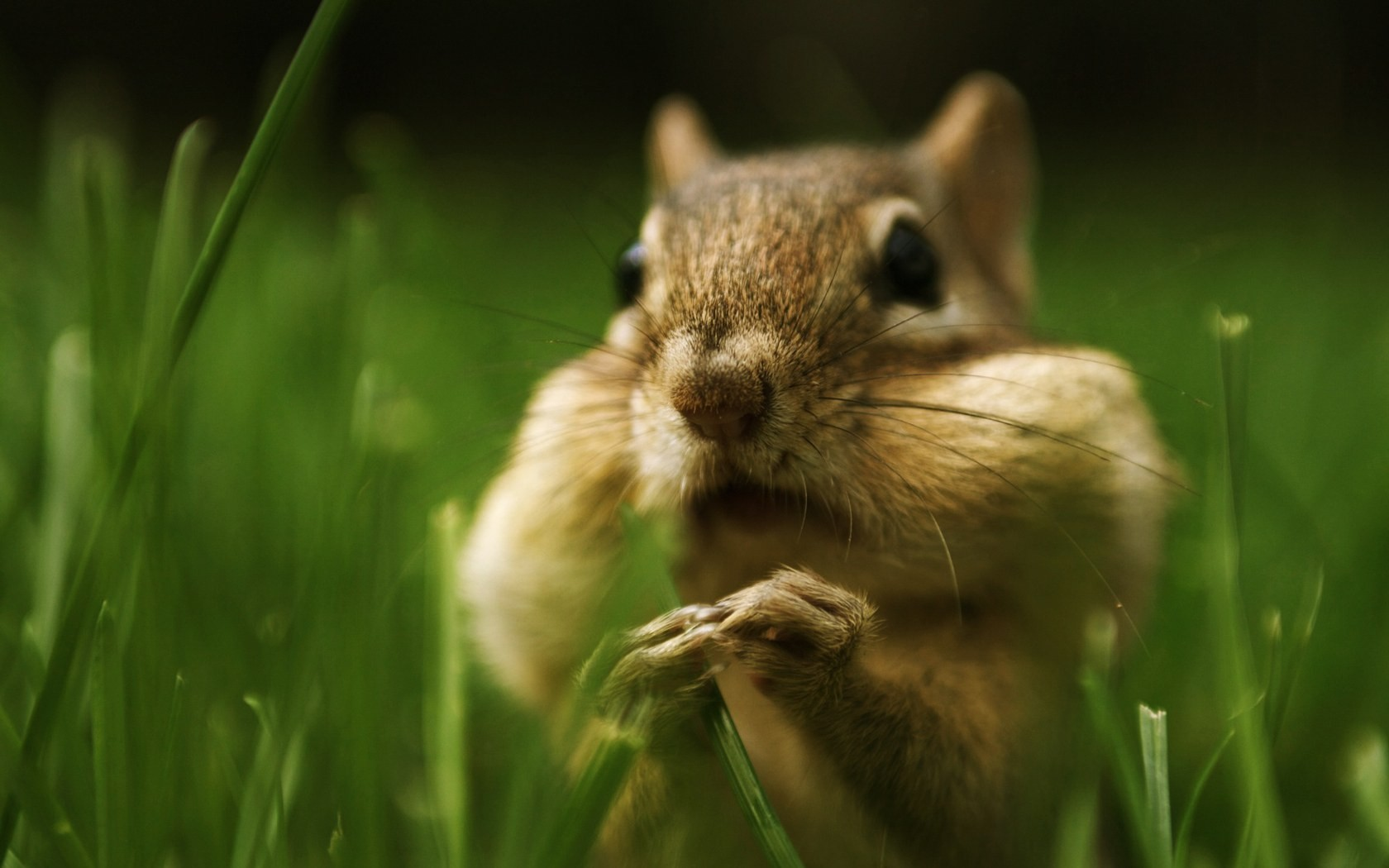 Cute Squirrel Wallpaper 16253