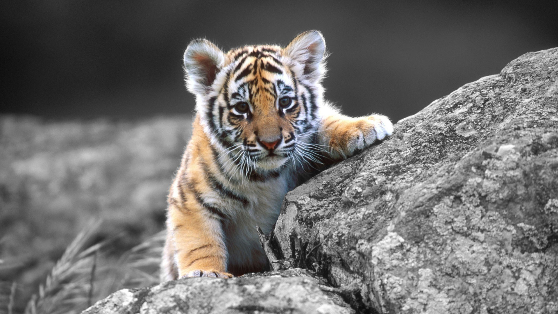 The term paper tiger