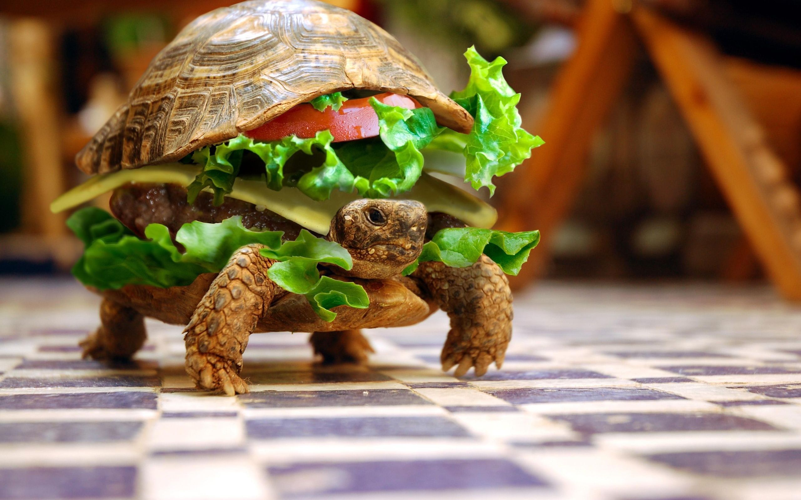 Funny Tortoise Wallpaper
