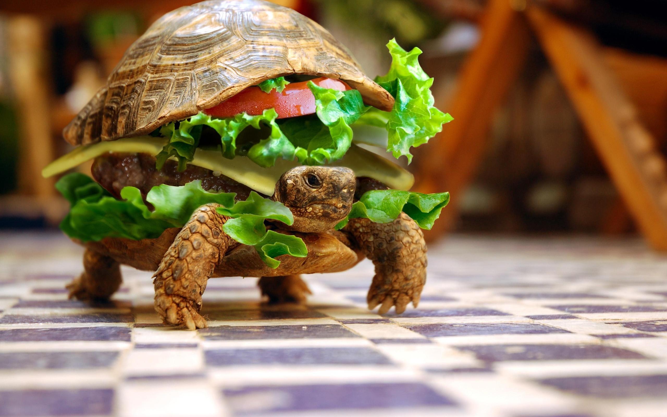Funny Tortoise Wallpaper