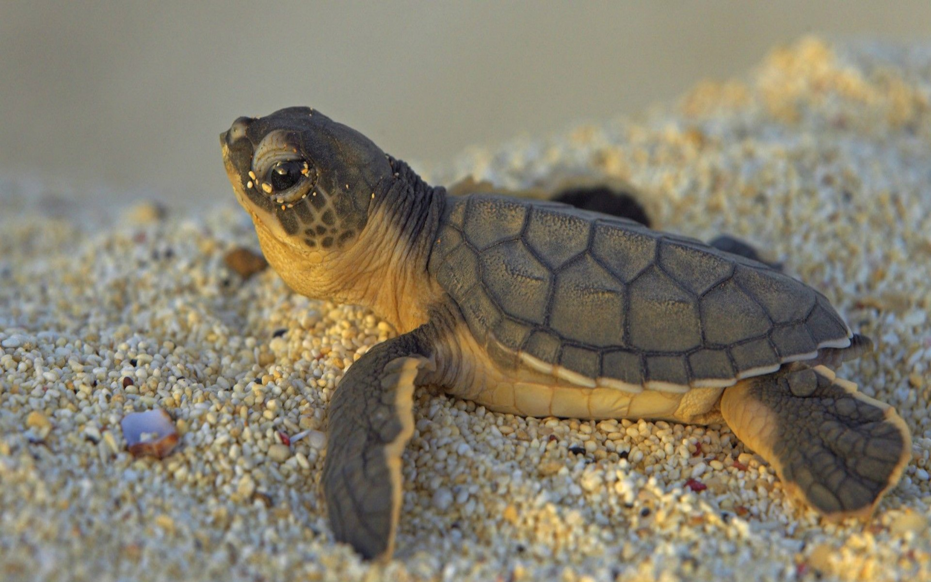 DOWNLOAD: cute turtle cub free picture 2560 x 1600