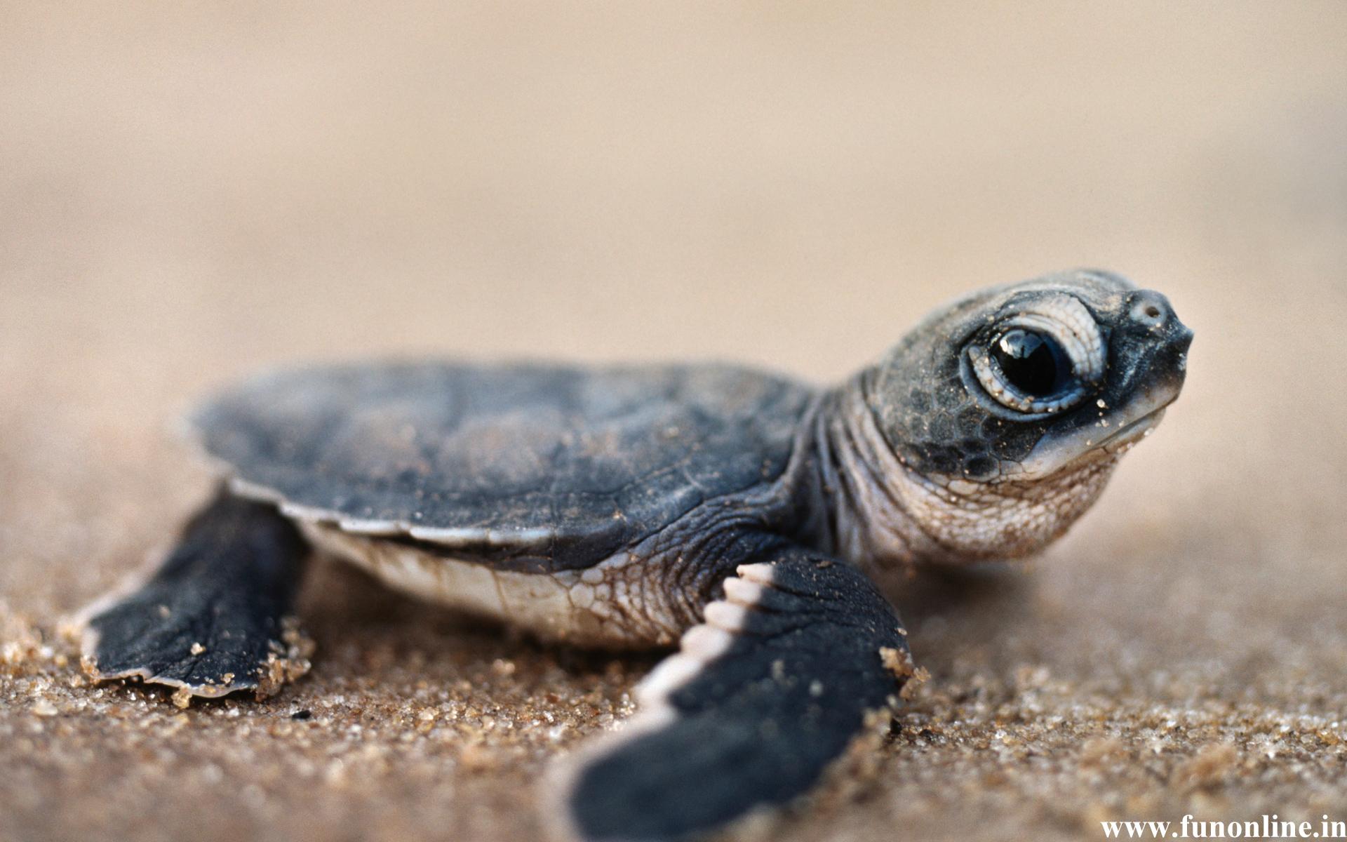 Cute Green Sea Turtle HD Wallpaper