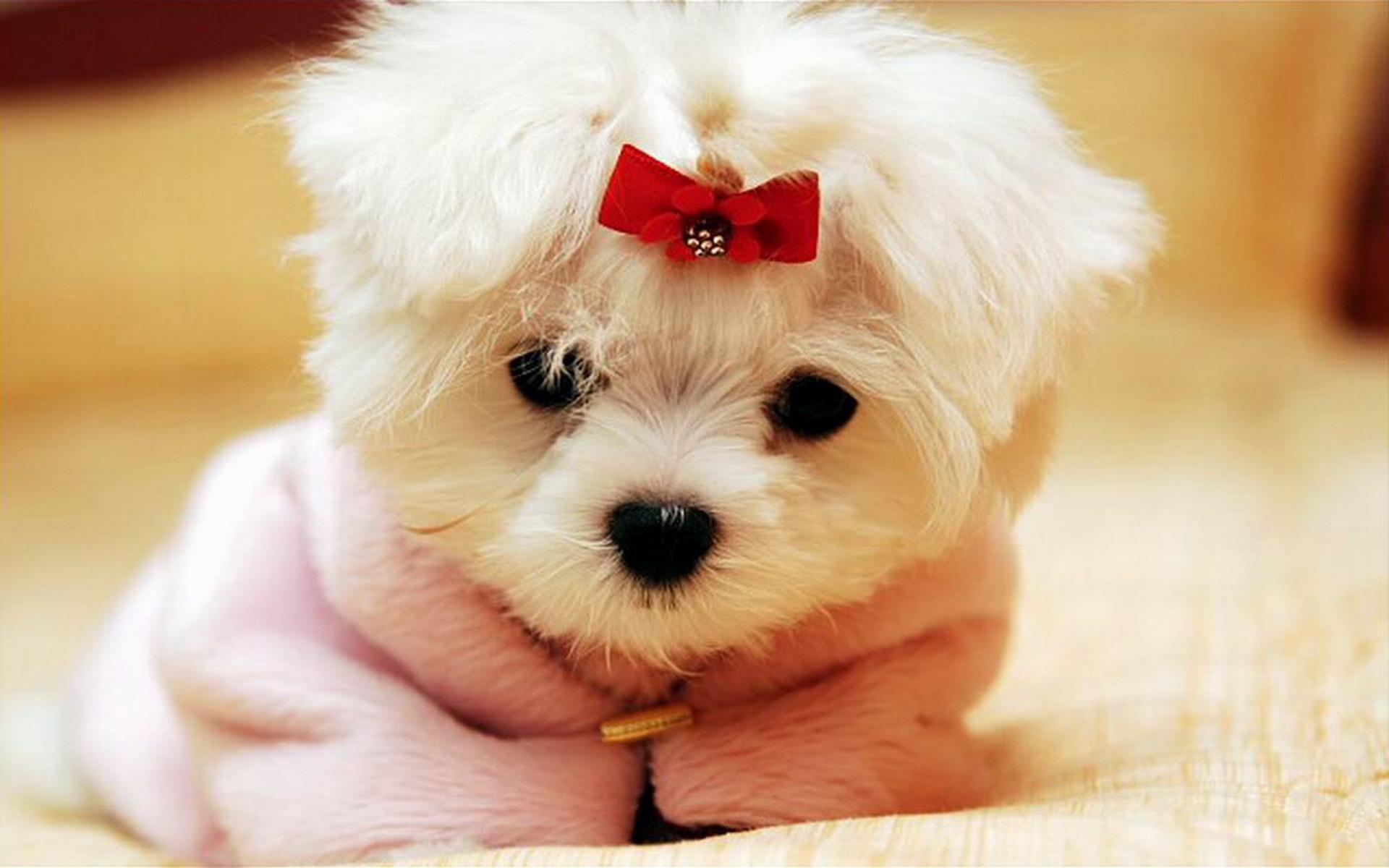 ... Cute-Dog-With-Ribbon-HD-Wallpaper-13605-Wallpaper ...
