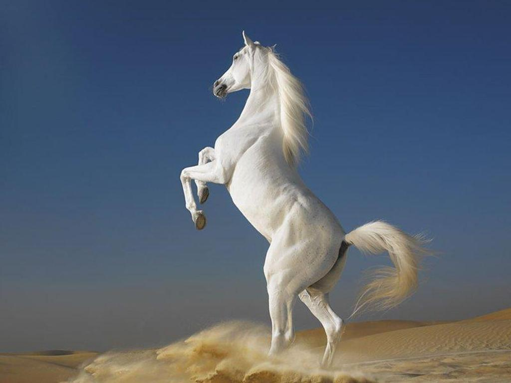Beautiful Cute White Coloured Horse Pictures / Photos / Wallpapers