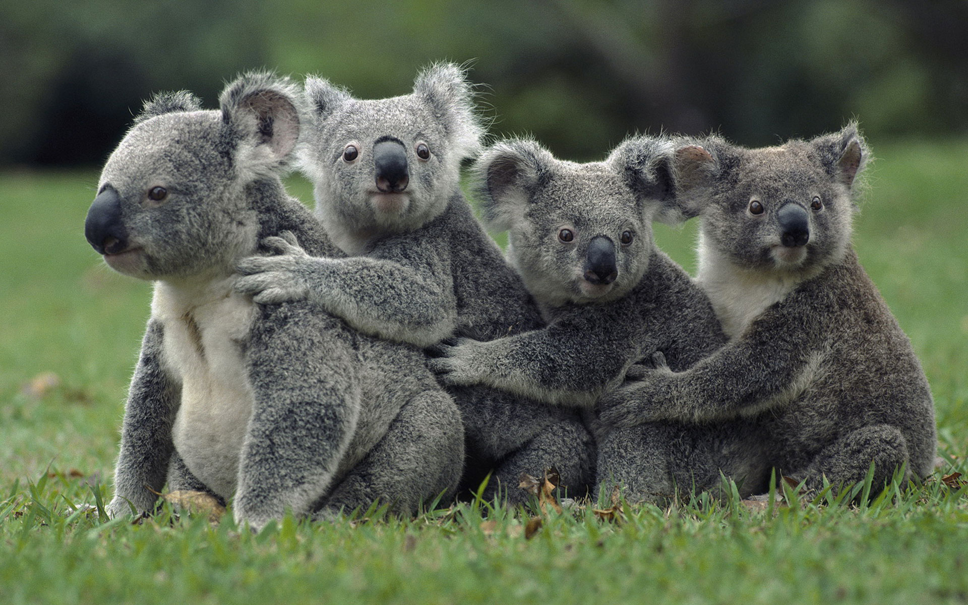 Cute Wildlife Wallpaper