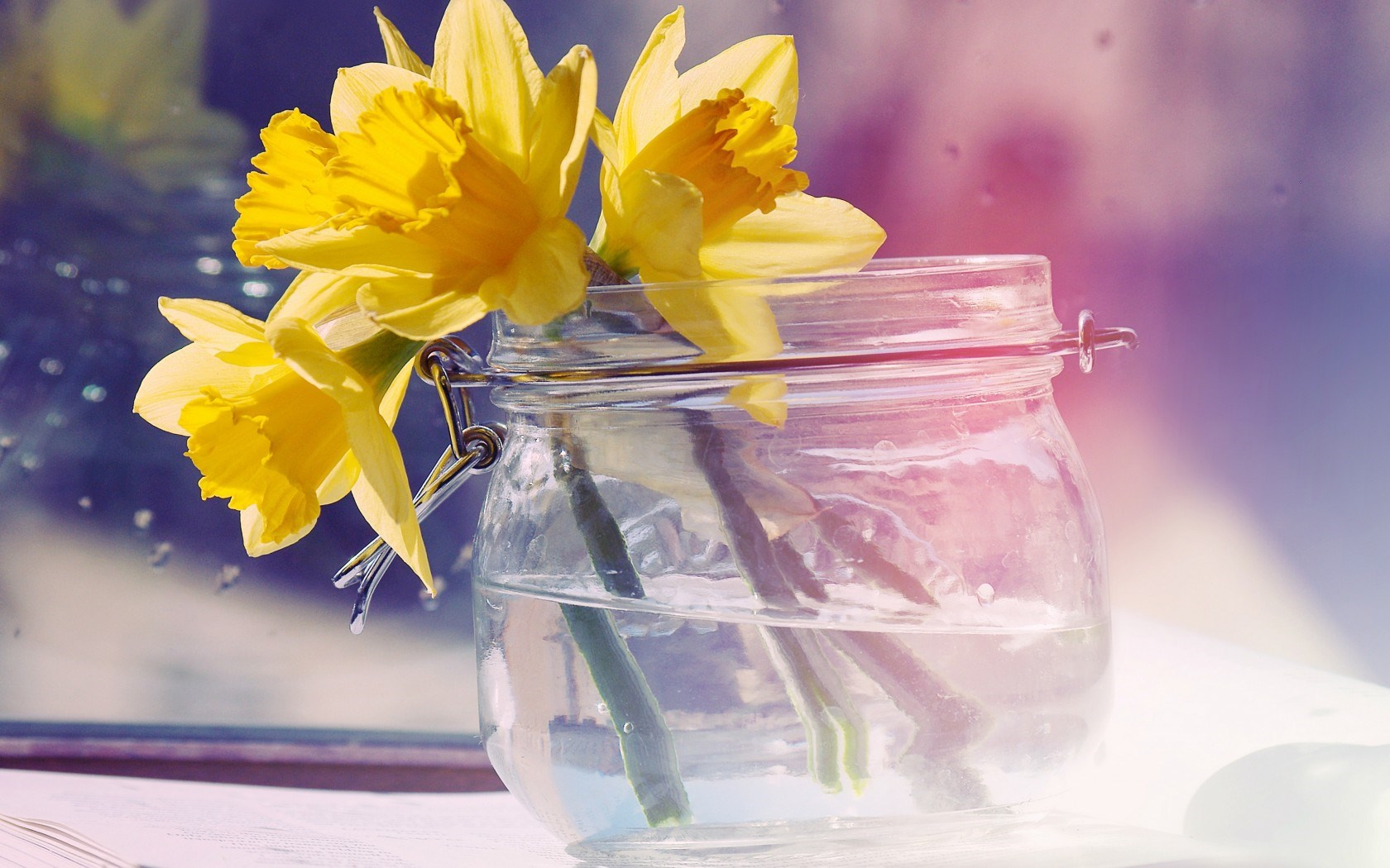 Daffodils Flowers Yellow Jar Water