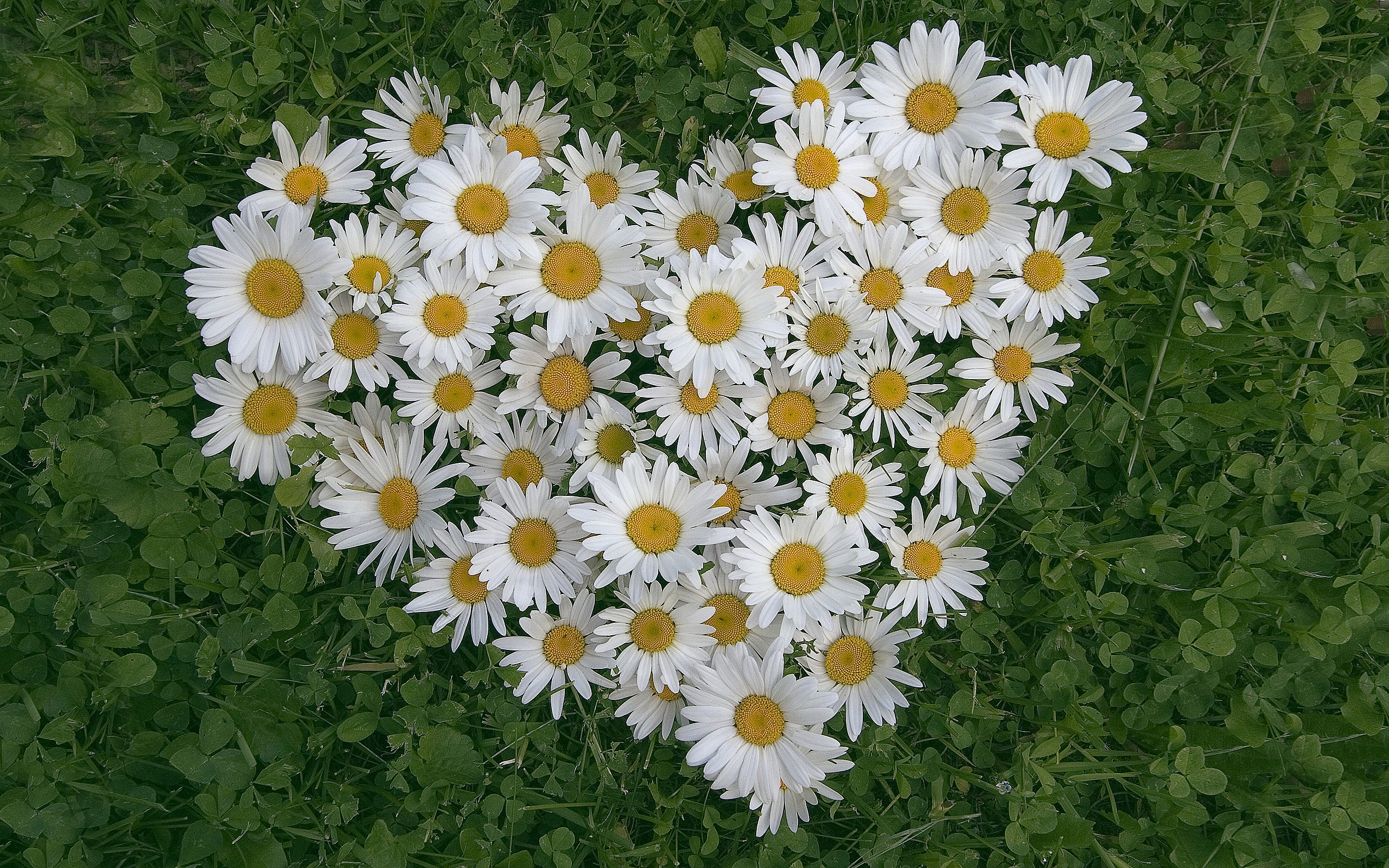 Until then, I will sit and figure my plan for some Daisies, because there isn't anyone I know that doesn't smile when they look at a bouquet of Daisies.