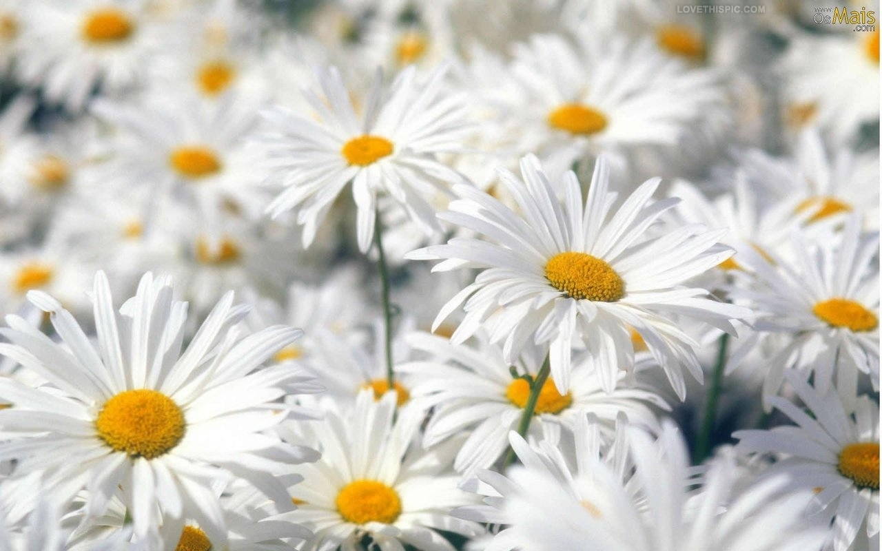 Welcome to Pick More Daisies!