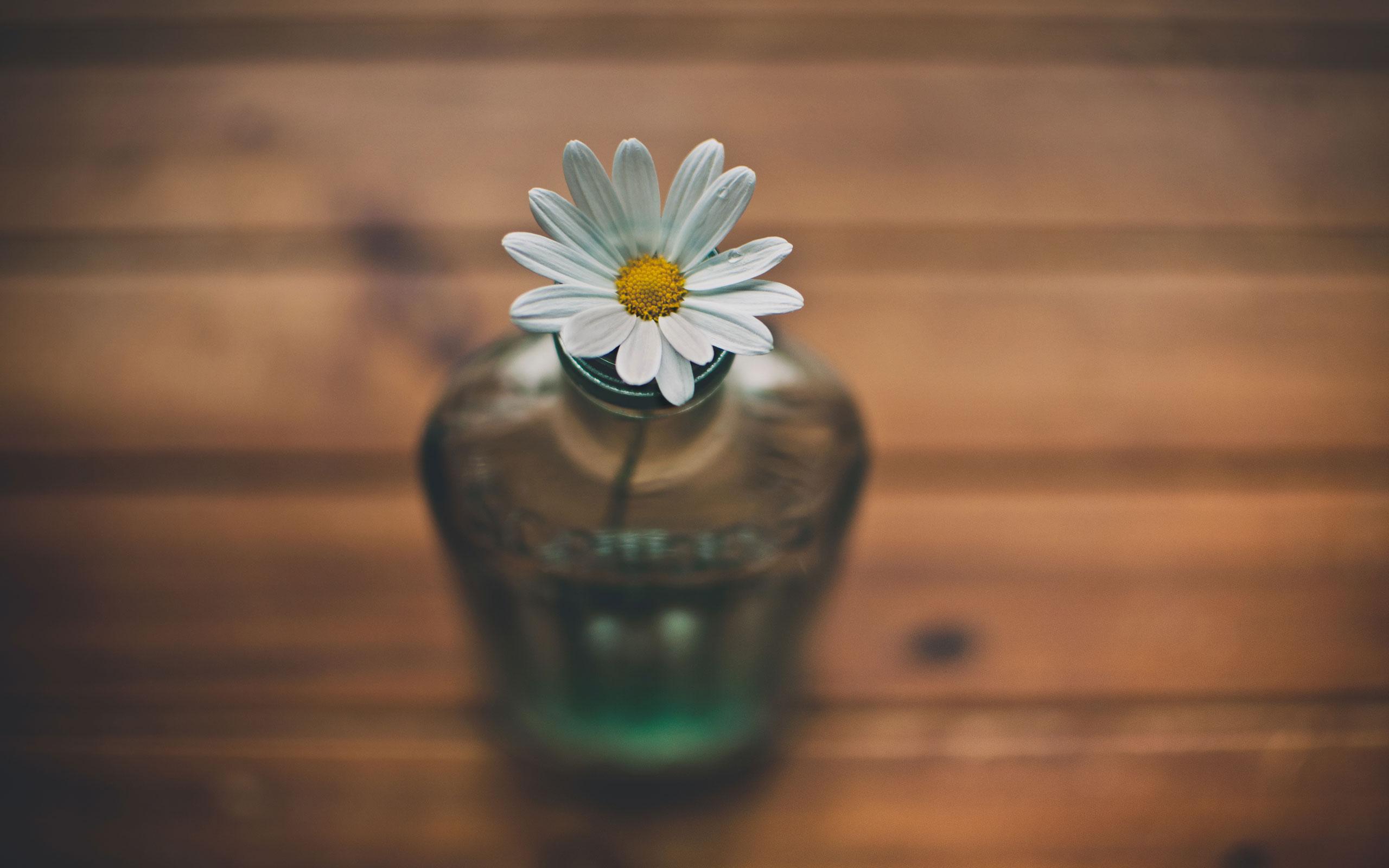 Daisy in Bottle