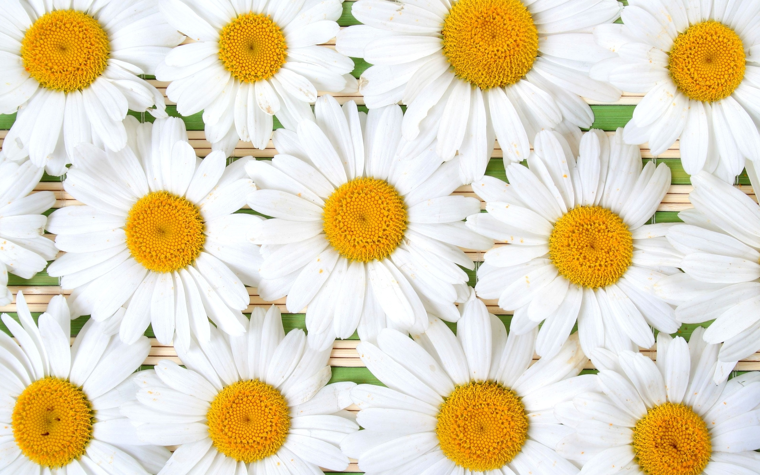 Daisy Wallpaper Iphone Pinit Gallery 2560x1600px