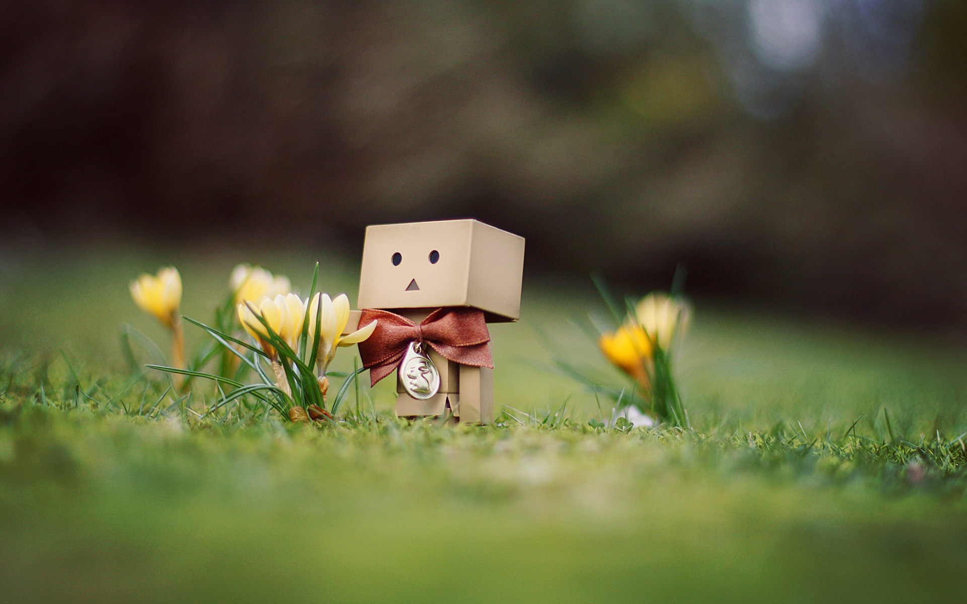 Danbo Pictures