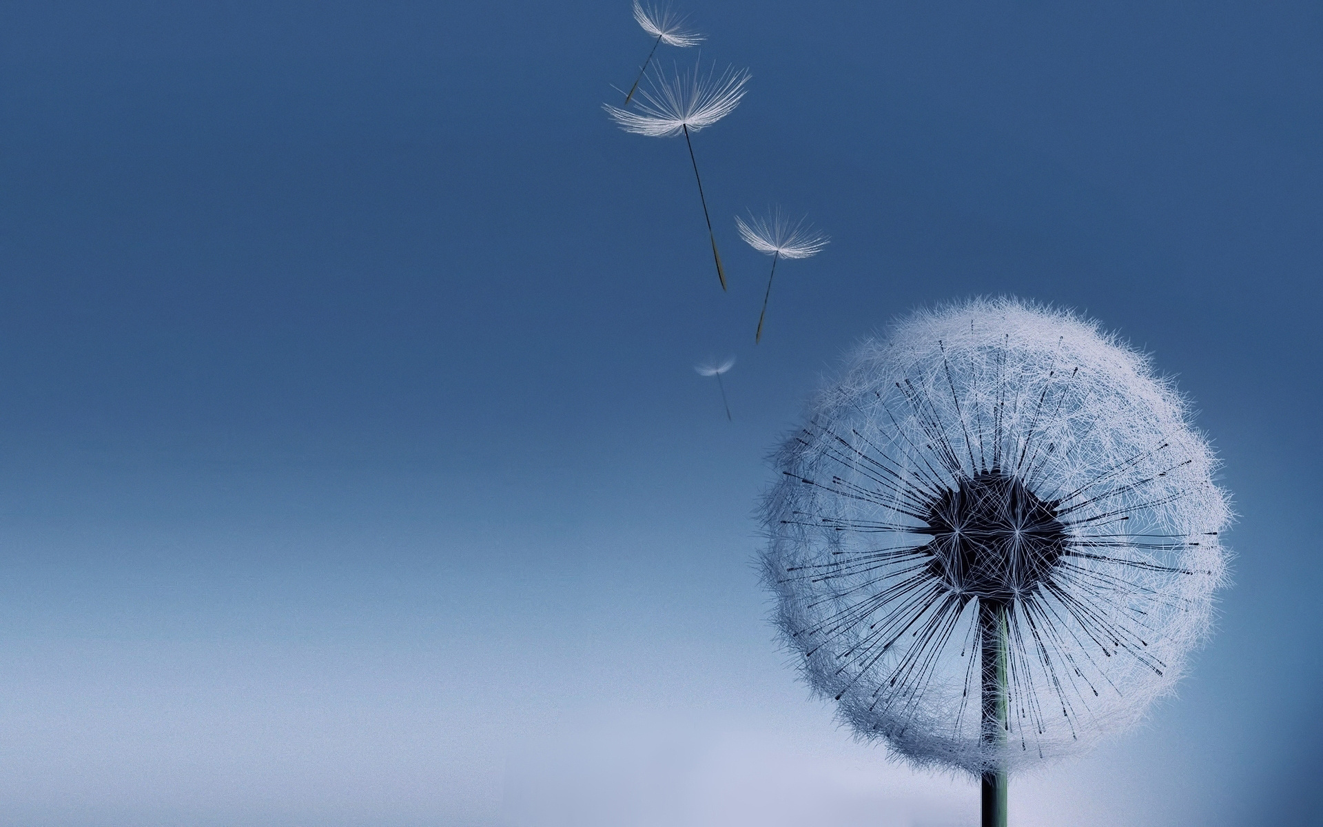 Dandelion Wallpaper; Dandelion Wallpaper; Dandelion Wallpaper ...