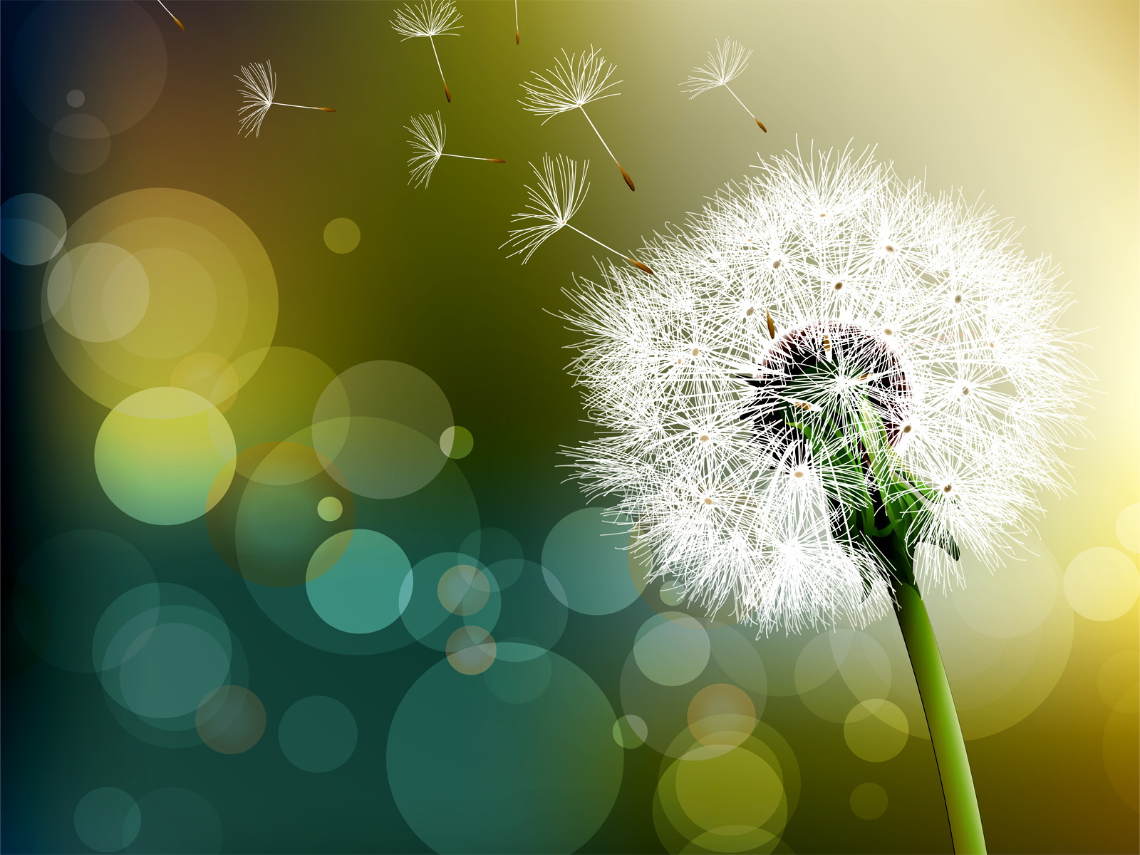 flower-wallpapers-dandelion-wallpaper-wallpaper-33918