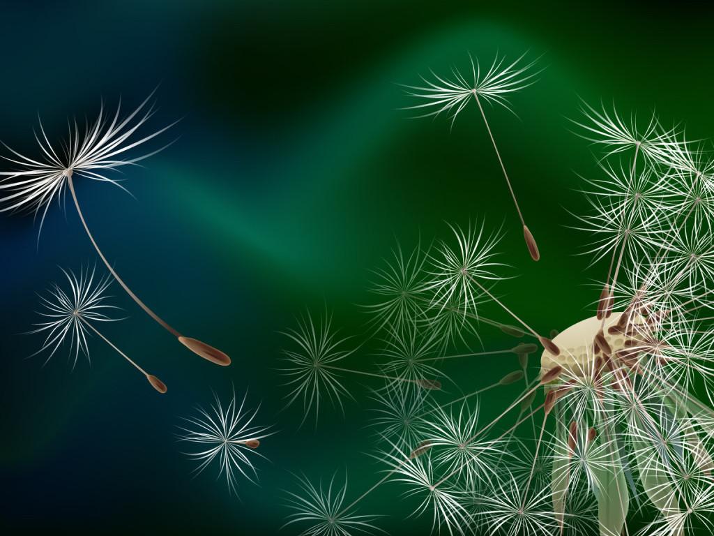 Dandelion Flower Macro Wallpaper HD 225