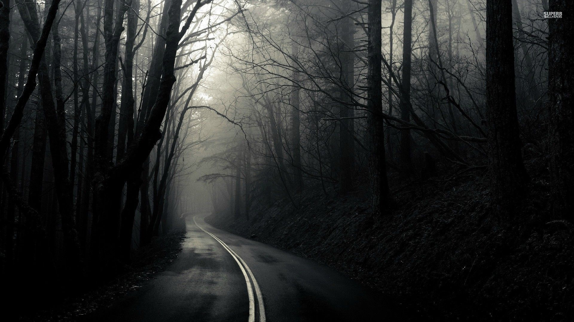 Download Road through the dark woods wallpaper
