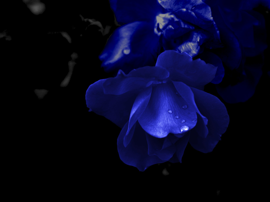 Dark Blue Flowers Tumblr Widescreen 2 HD Wallpapers