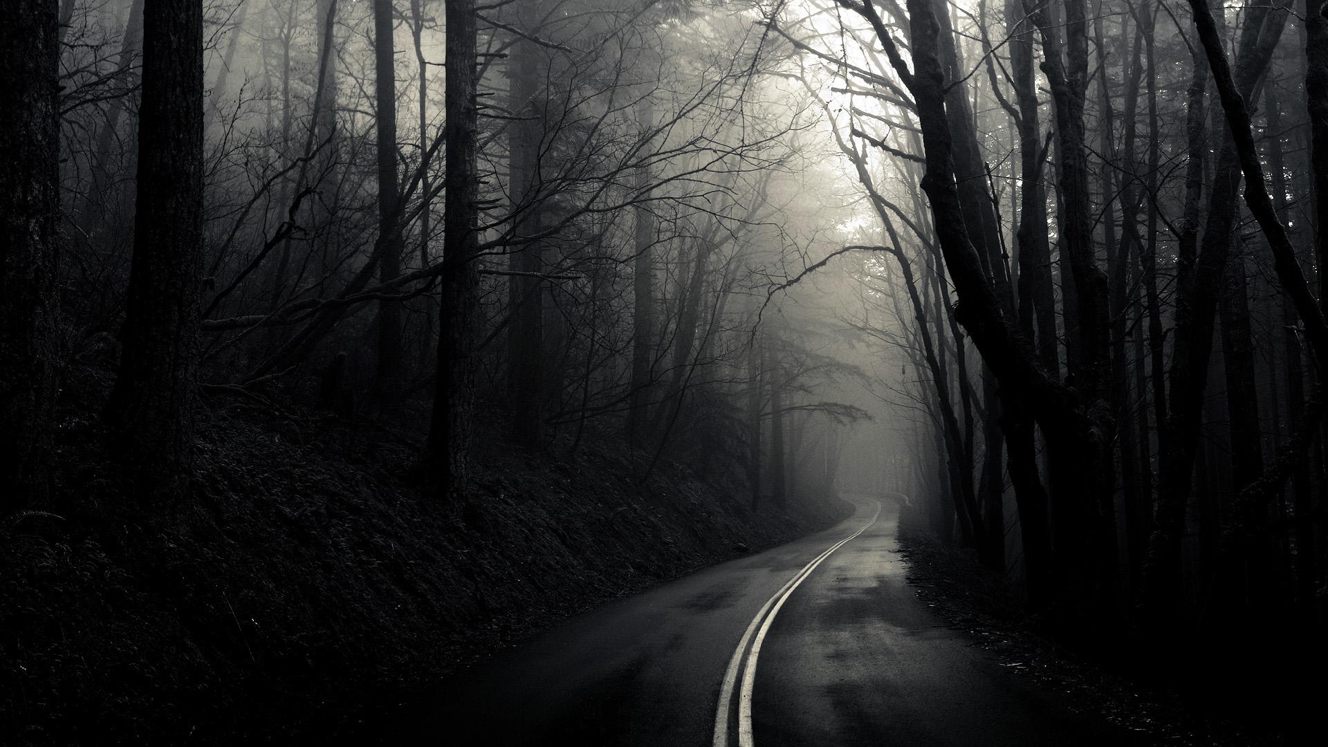 Dark Forest (7)
