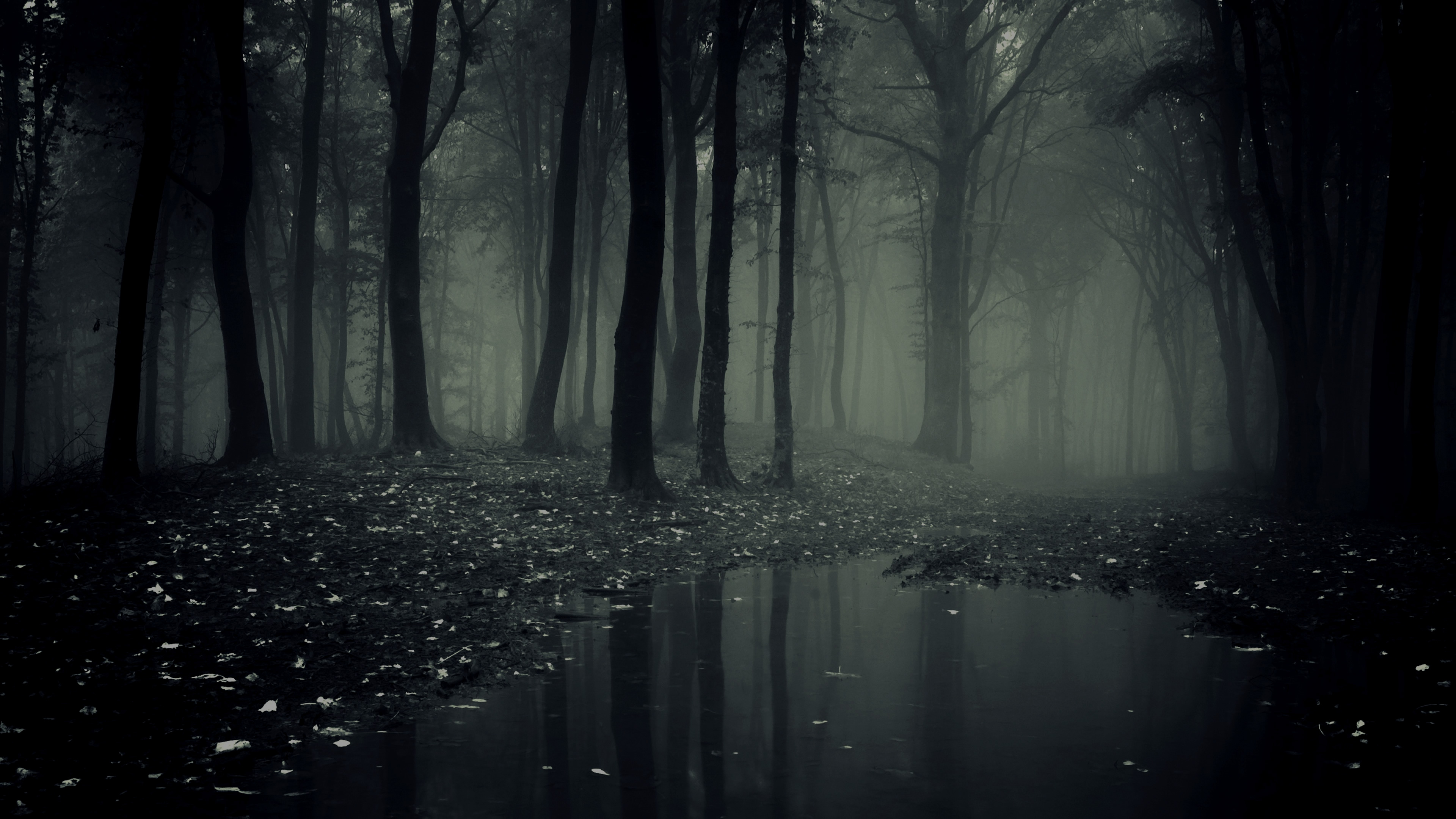 Dark Forest New Wallpaper