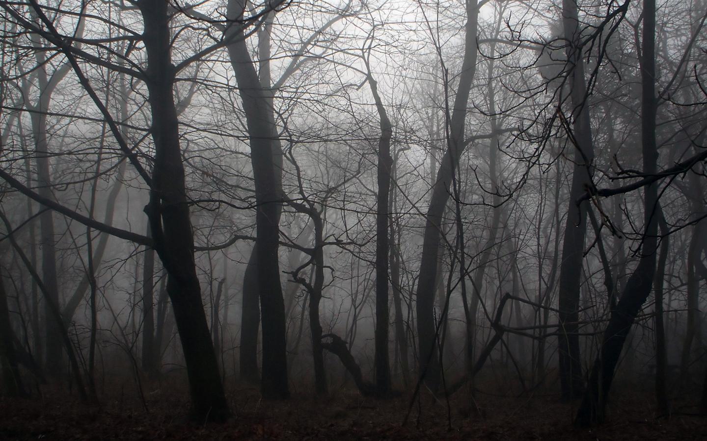 ... Dark Forest Wallpaper ...