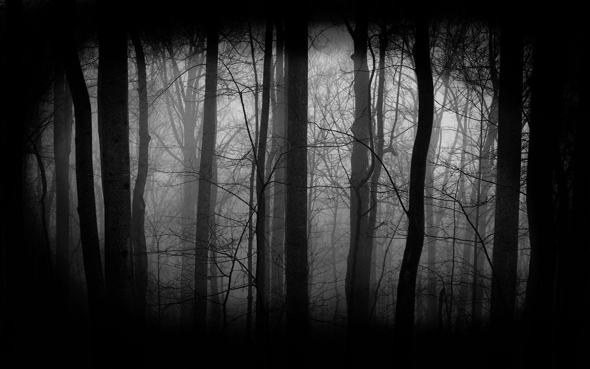 ... Dark Forest Wallpaper · Dark Forest Wallpaper