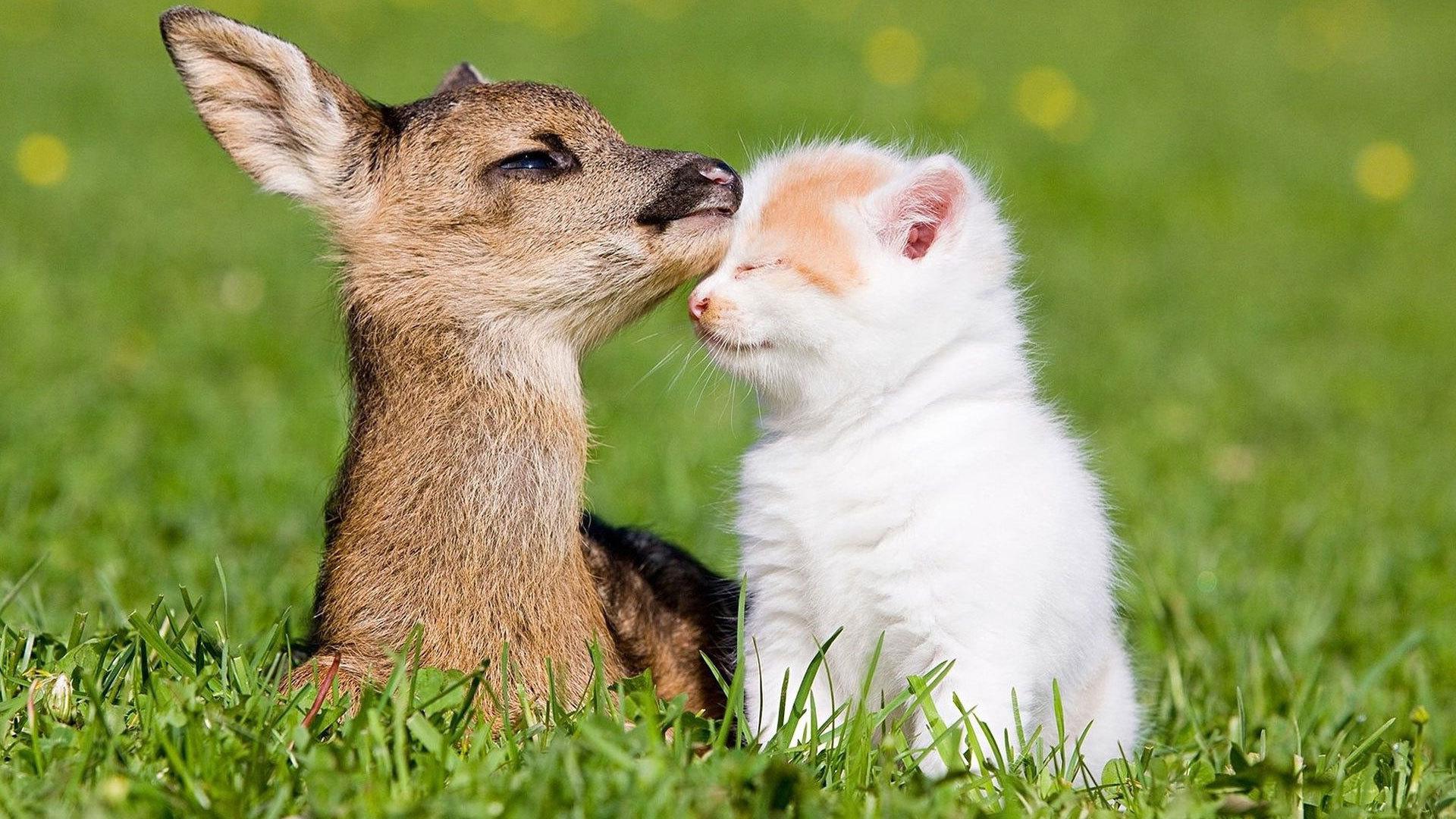 Cute Fawns (Baby Deer)