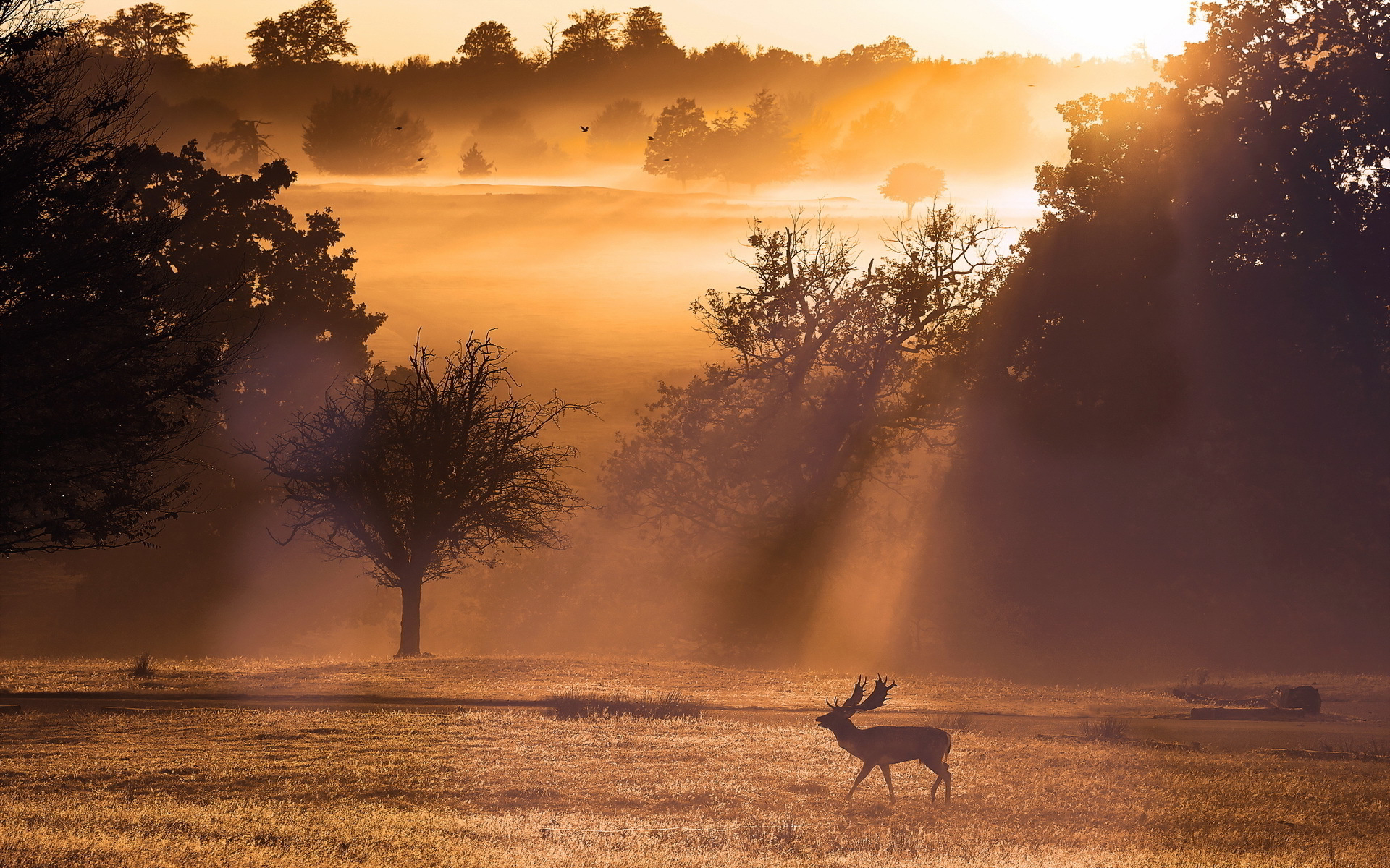 Deer sunset landscape