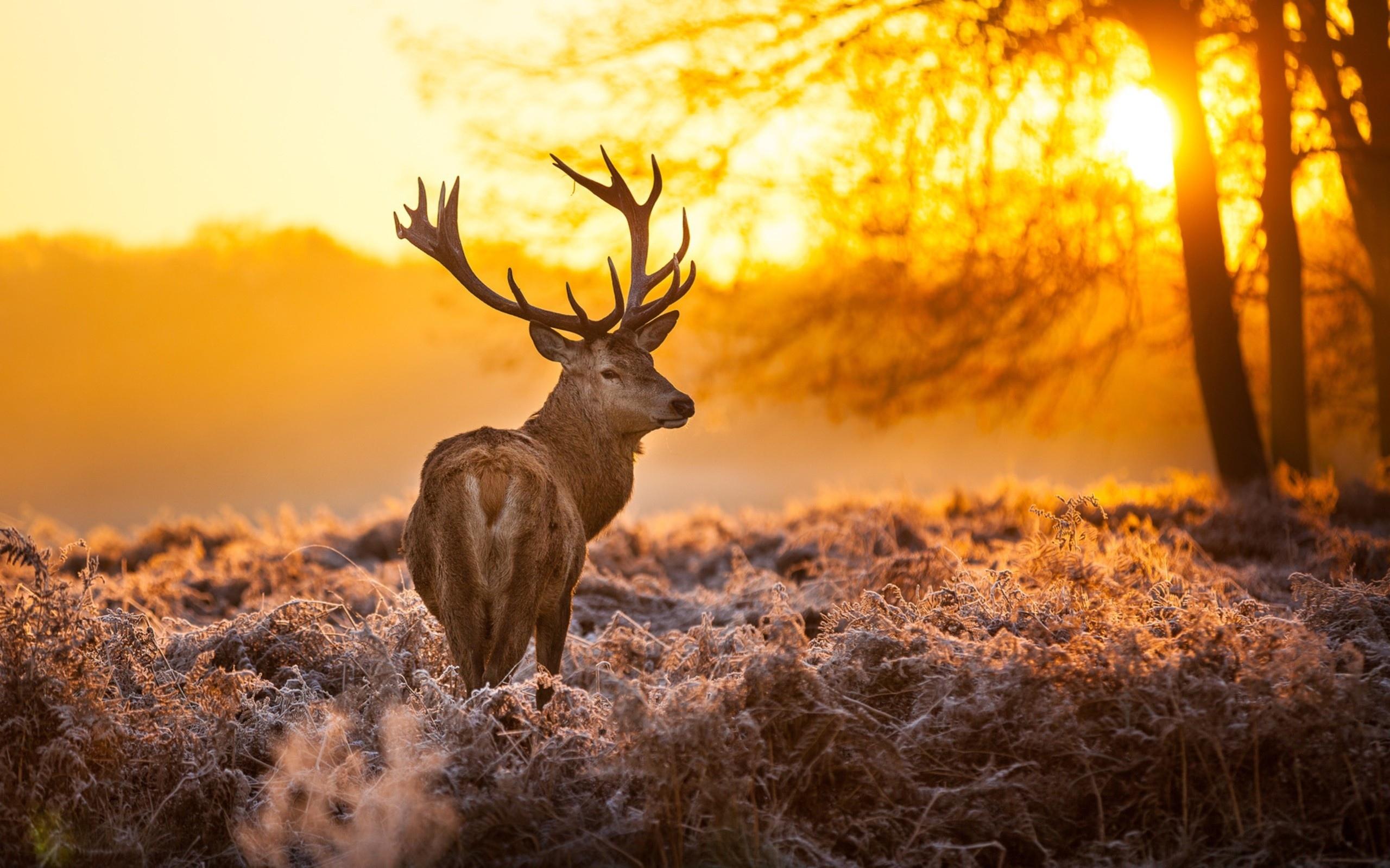 Deer Wallpaper; Deer Wallpaper; Deer Wallpaper ...