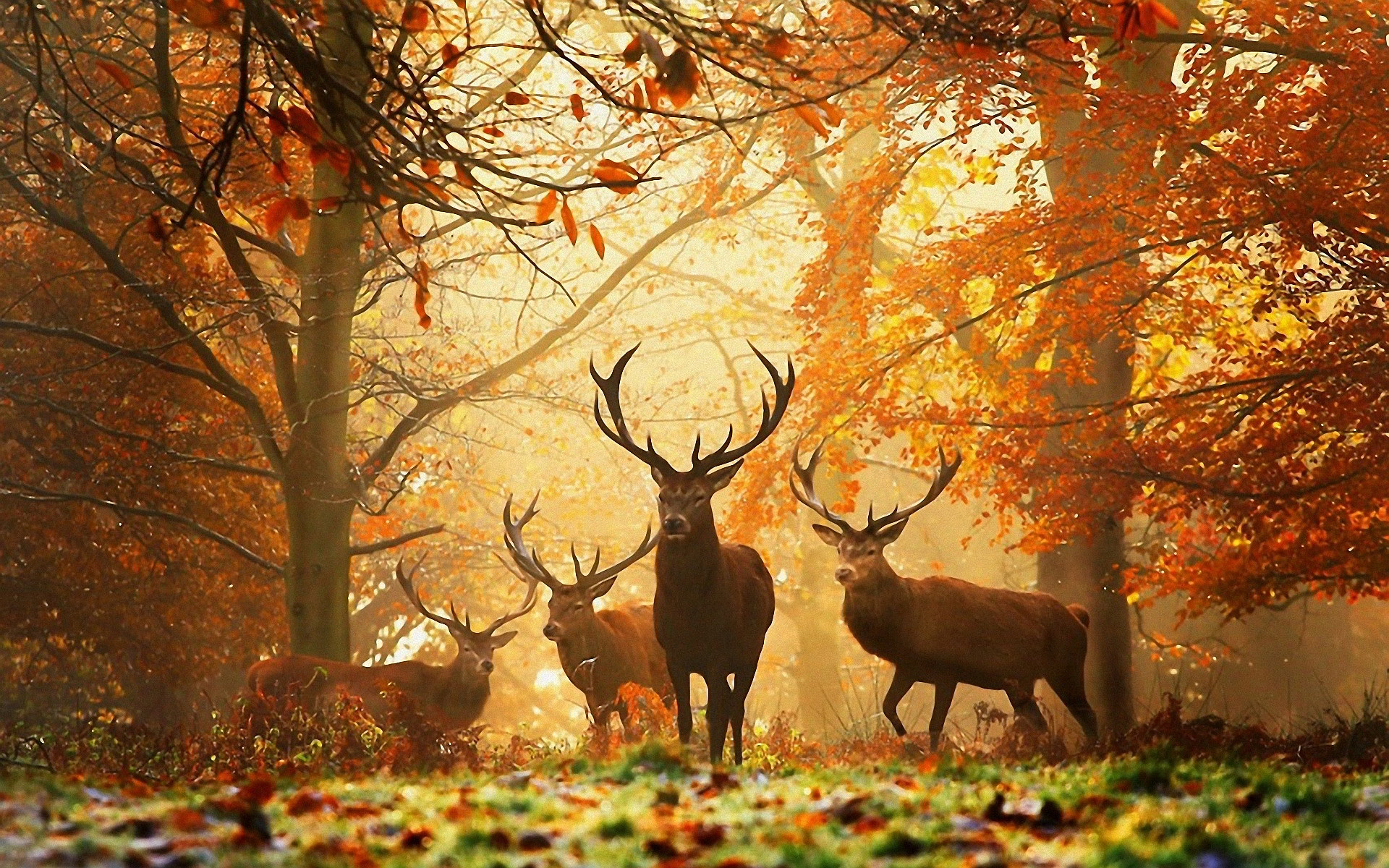 Deers Autumn Wallpapers Pictures Photos Images. «