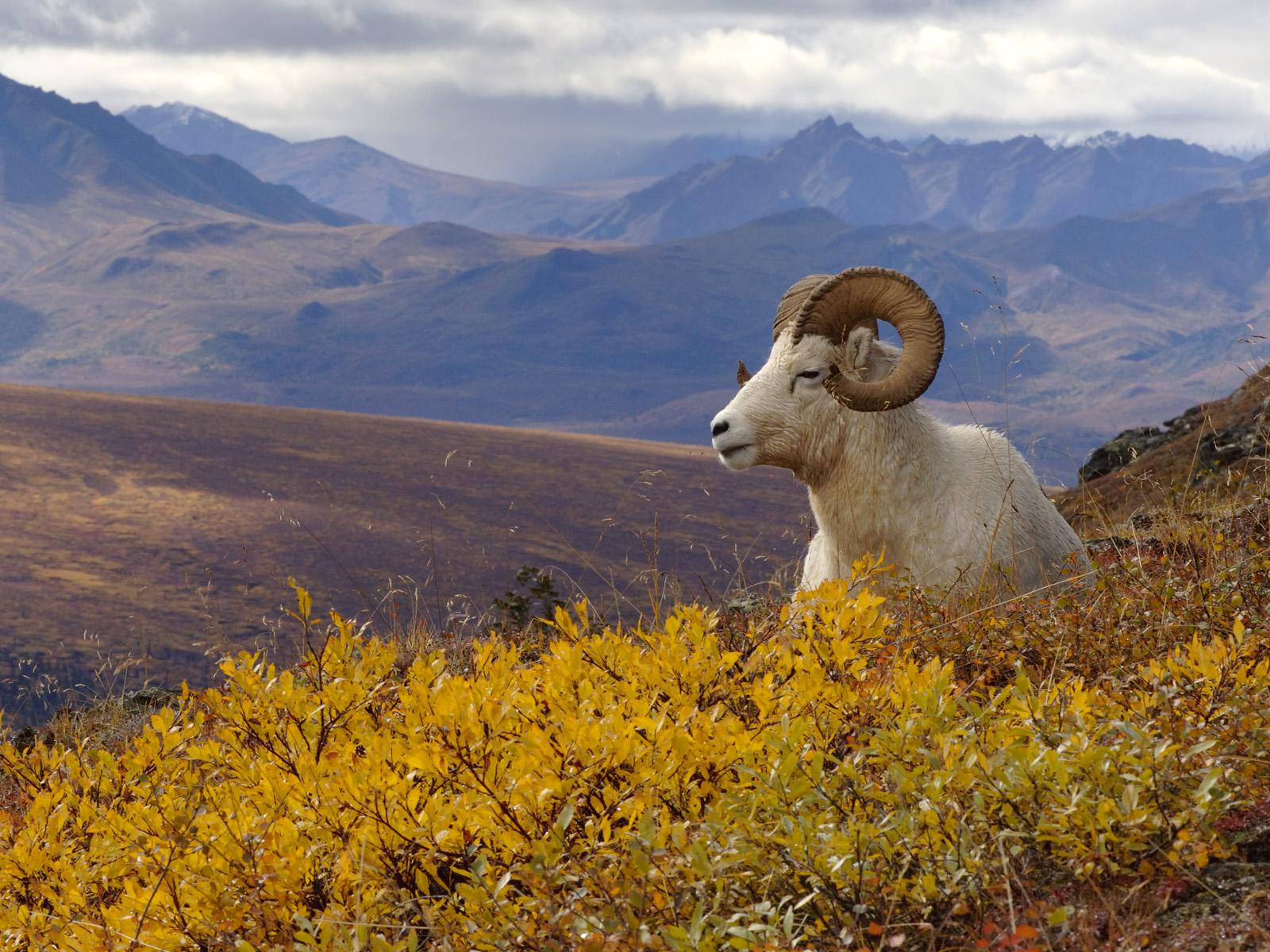 Denali National Park Pictures