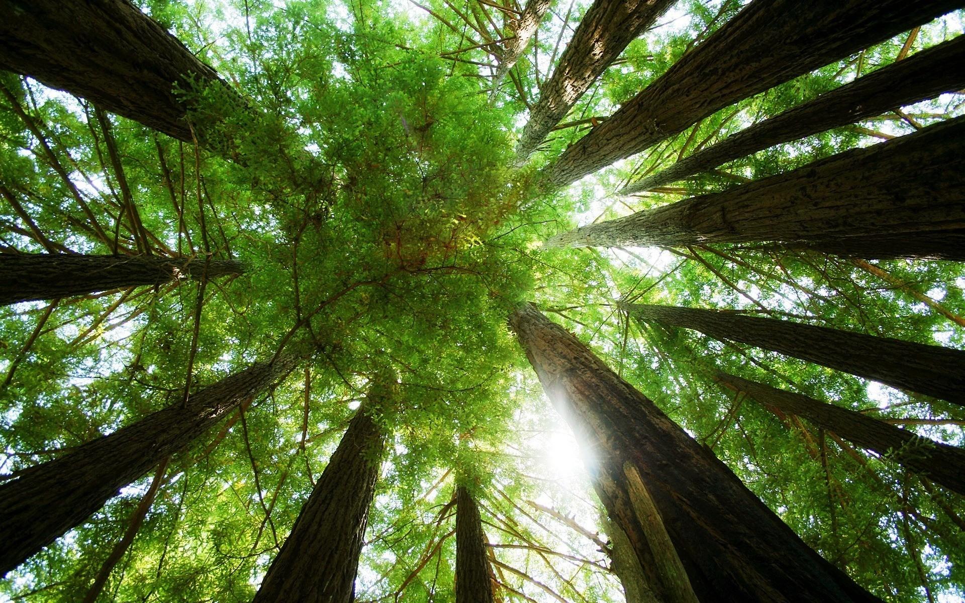Dense Green Treetop