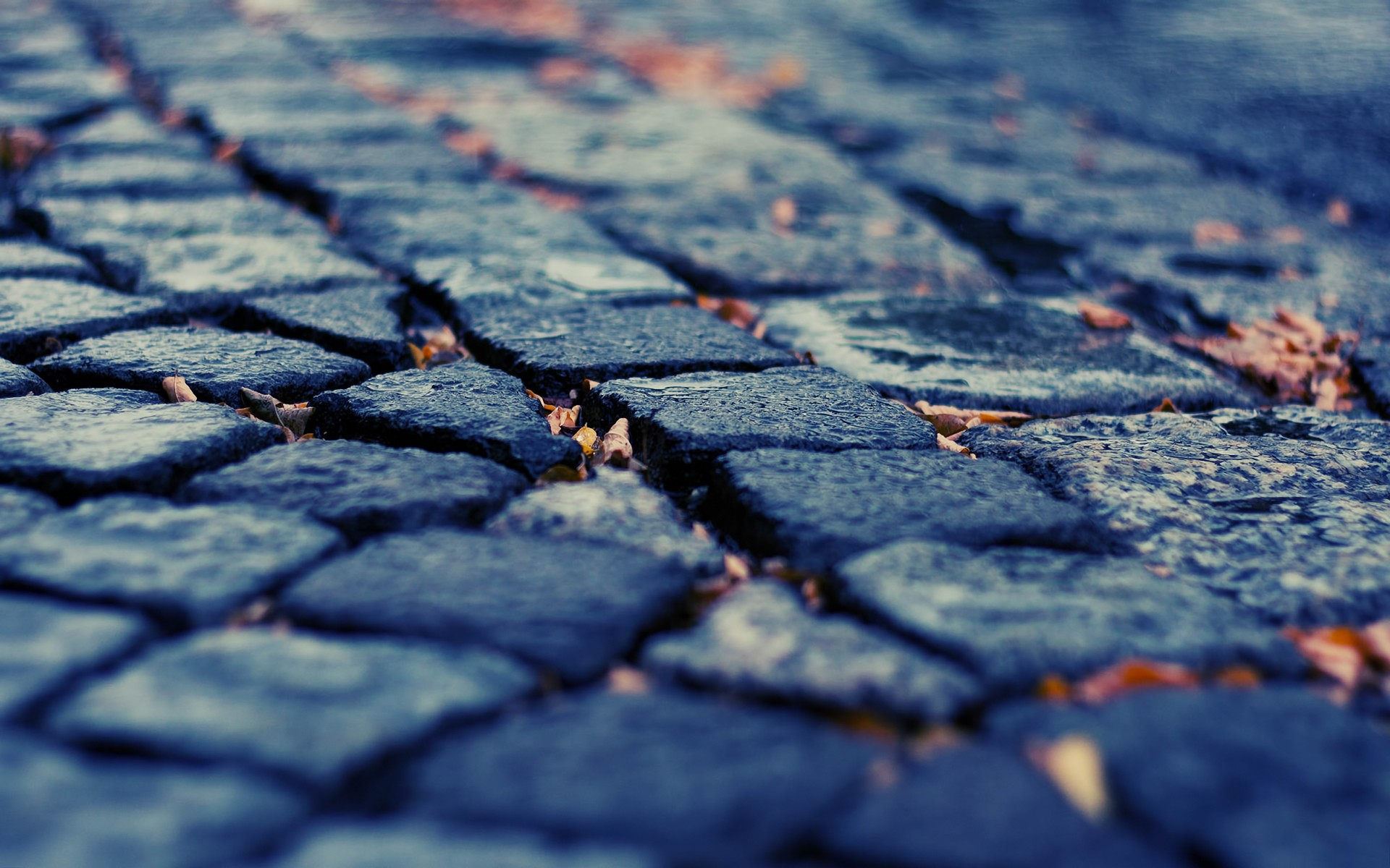 Download Wallpaper pavement depth of field cobblestones fallen leaves -15372-3