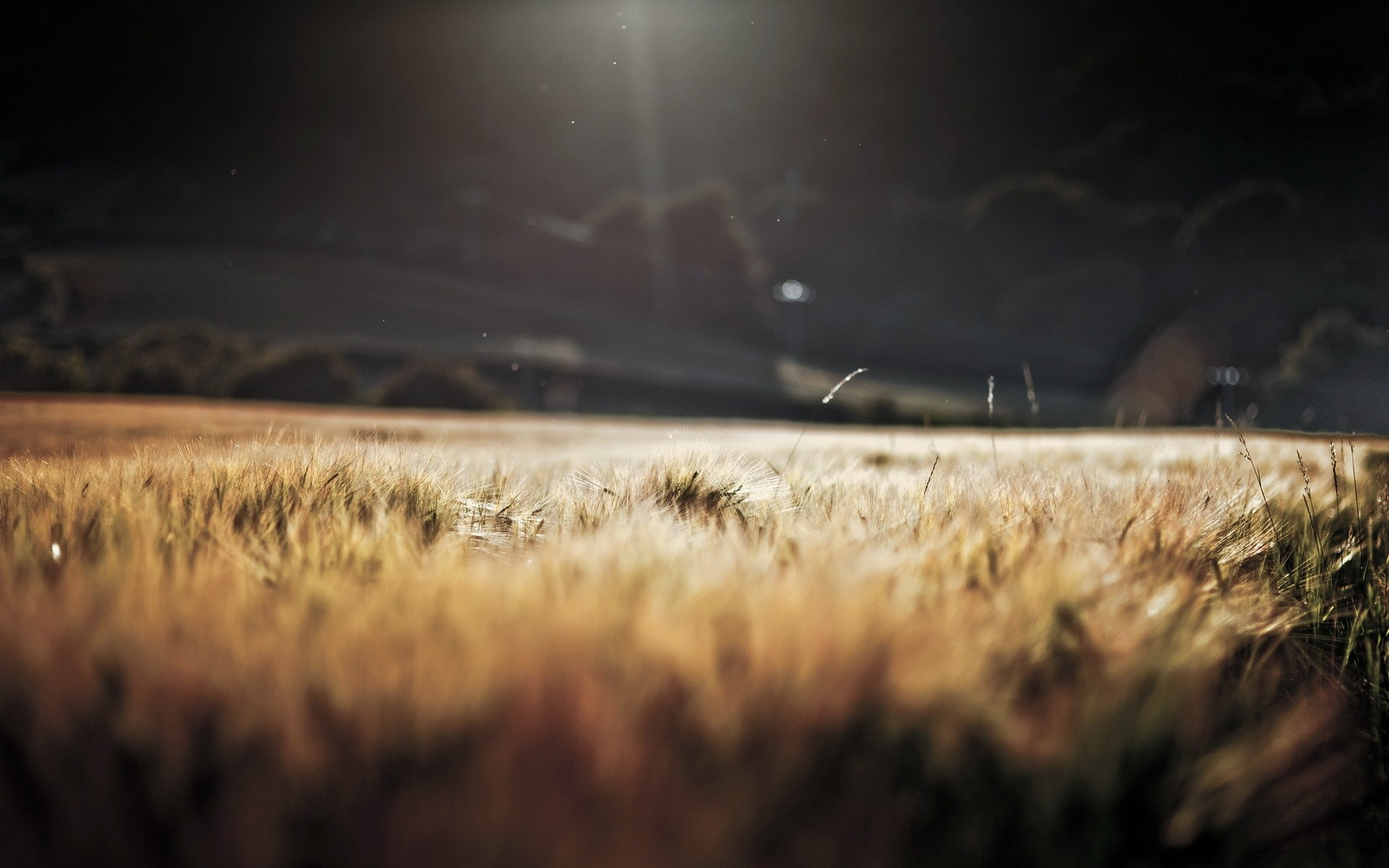 ... Lovely Depth of Field Wallpaper