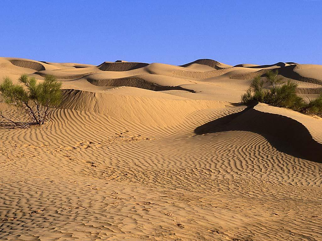 ... desert landscape plants ...