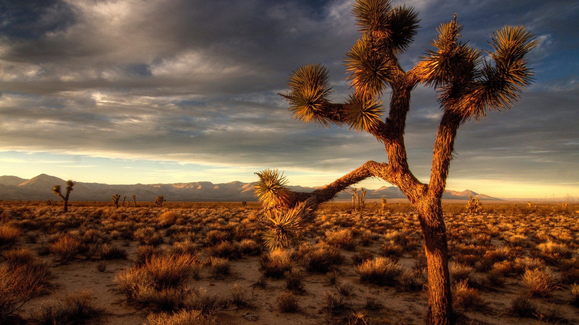 Desert Vegetation Wallpaper