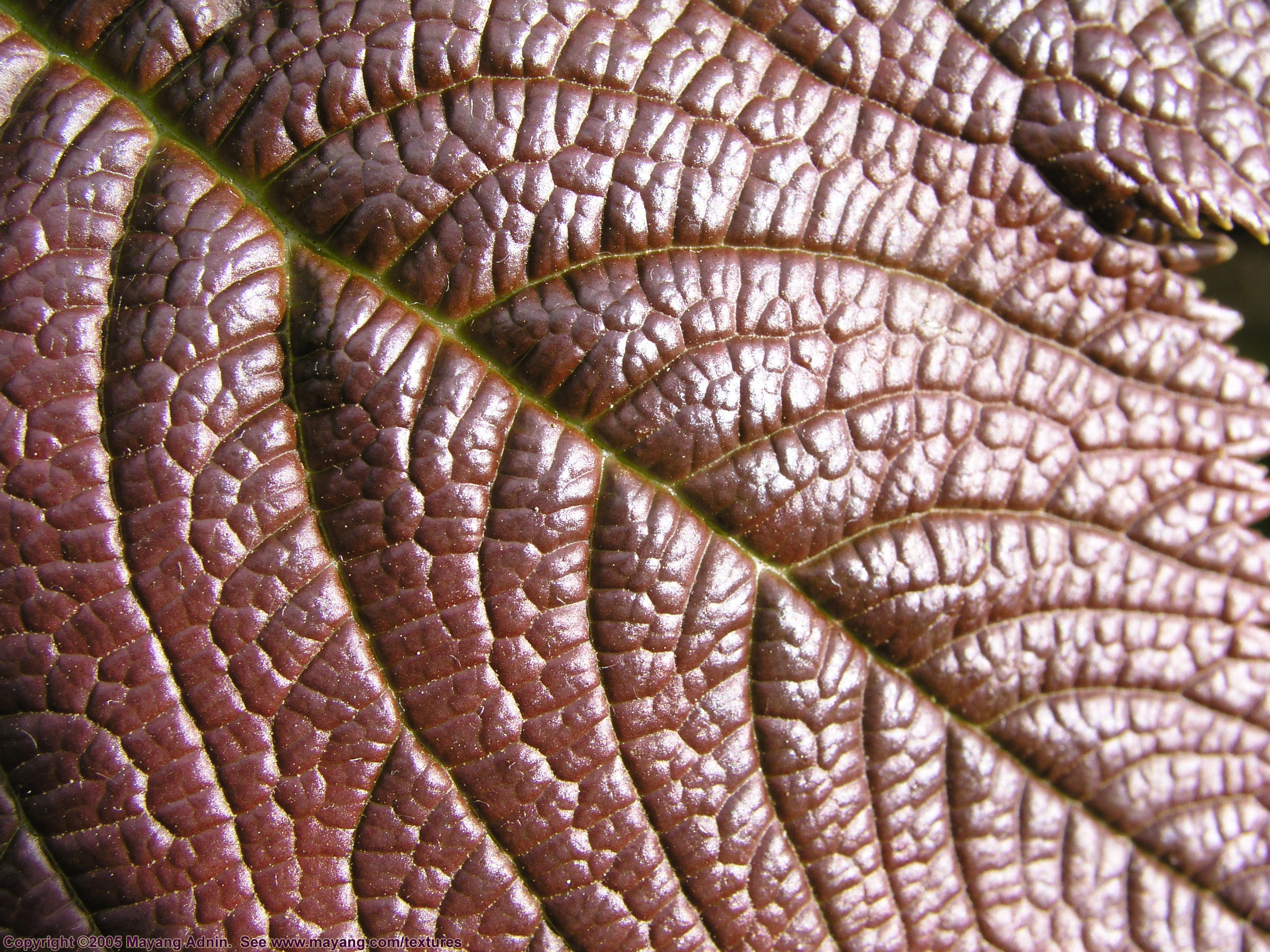 shiny leaf detail