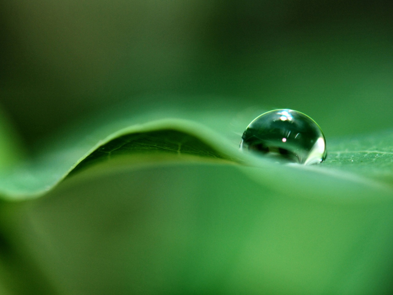 Green Dew - scenery wallpaper. 1024x768 1152x864 1280x1024 1600x1200 ...
