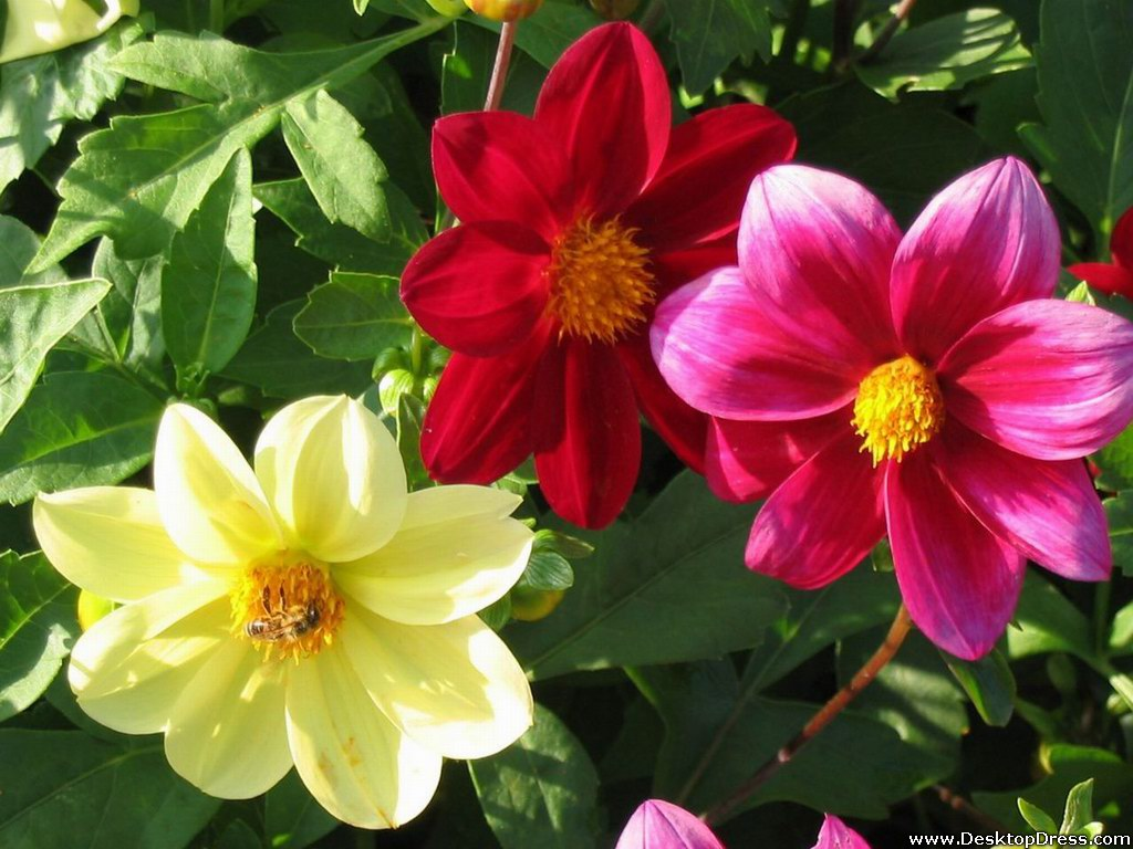 Different Flowers Images 15 HD Wallpapers
