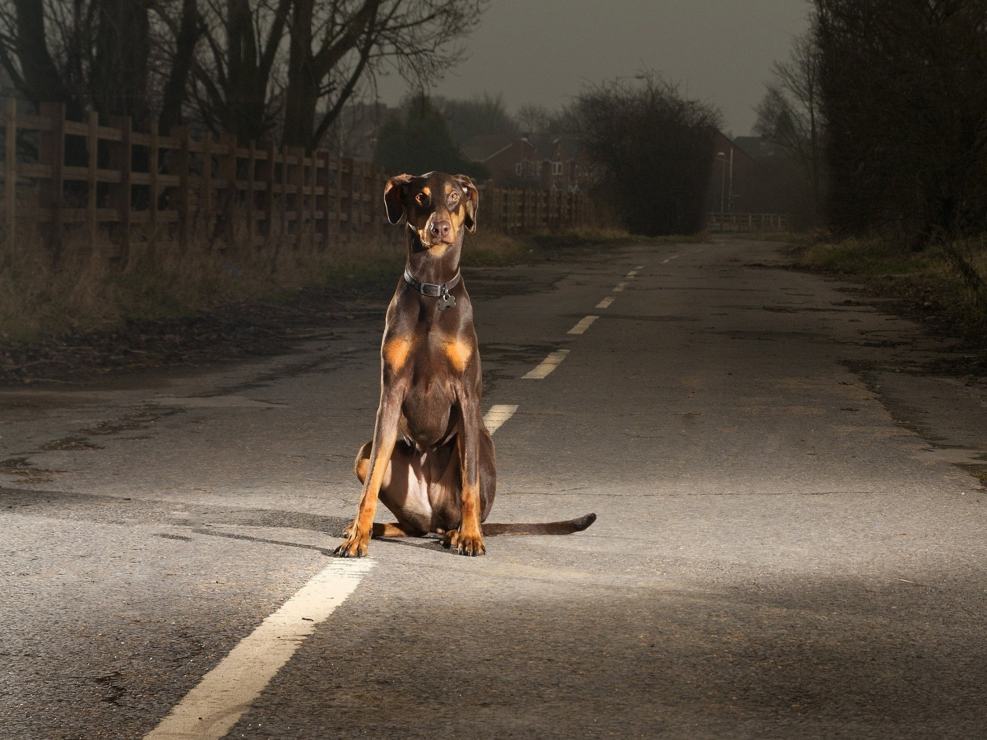 Description: The Wallpaper above is Doberman Night Wallpaper in Resolution 1920x1440. Choose your Resolution and Download Doberman Night Wallpaper